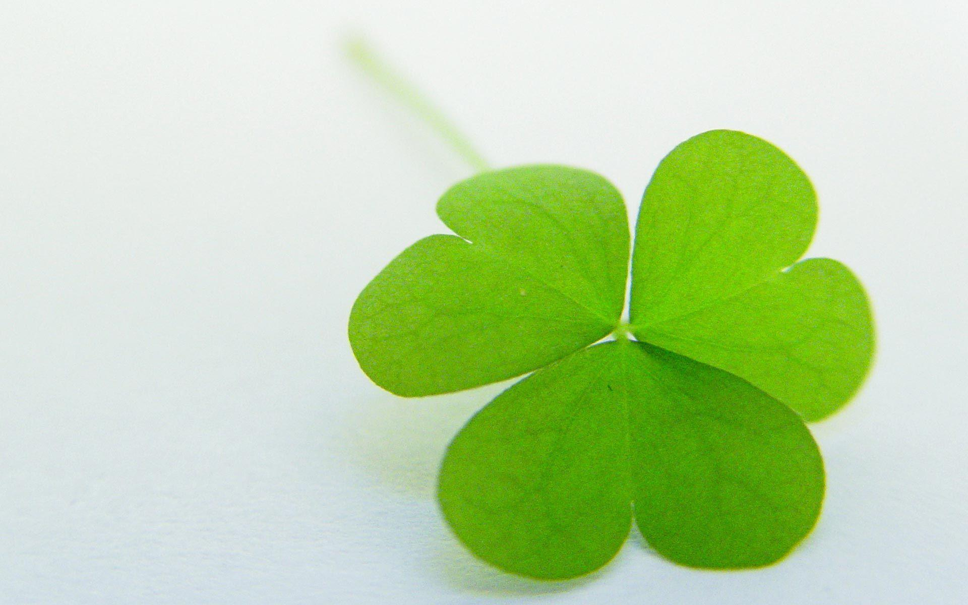Four Leaf Clover Backgrounds Wallpapers