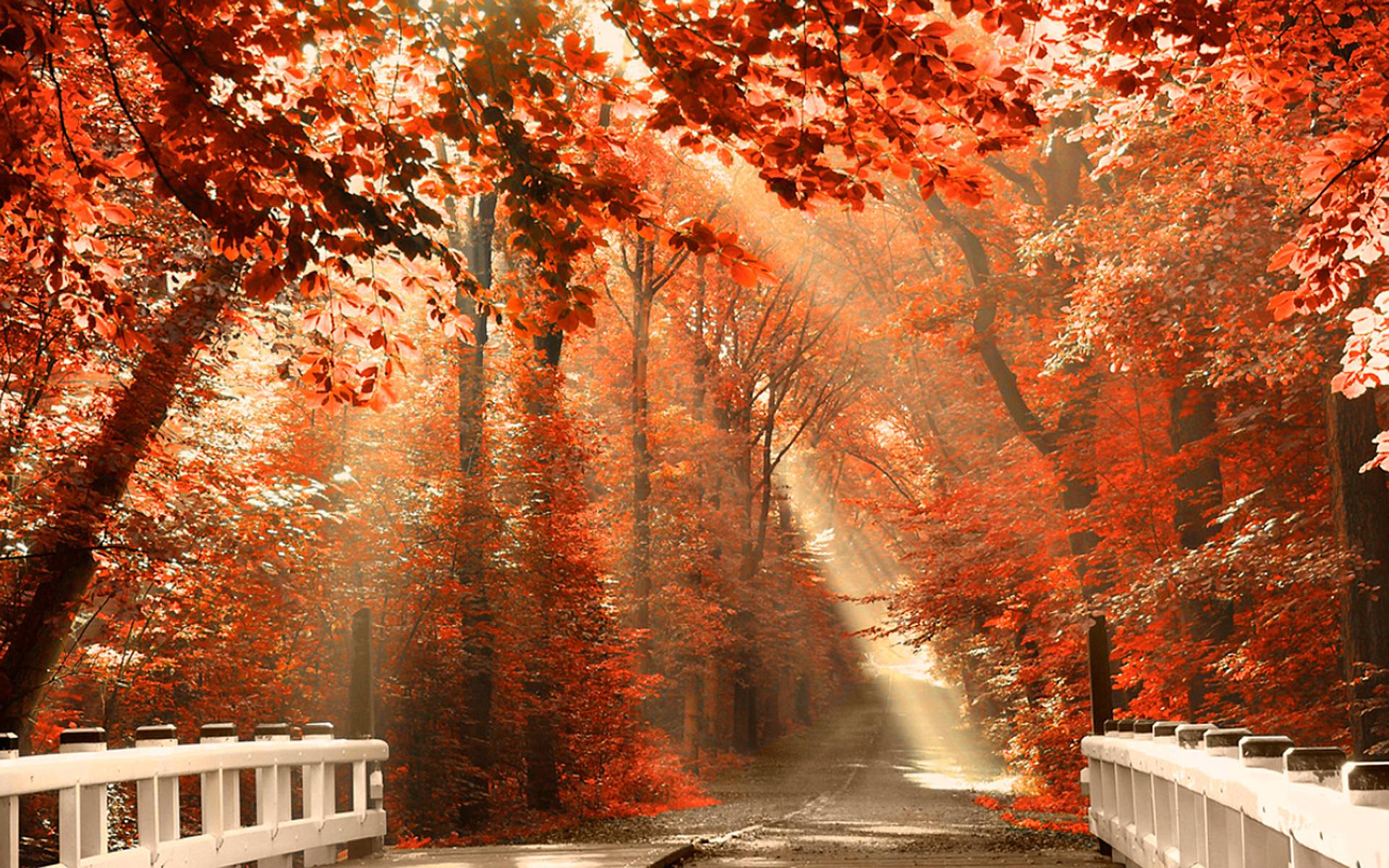 sunshine fall leaves wallpaper pc 7190 wallpaper wallpaper