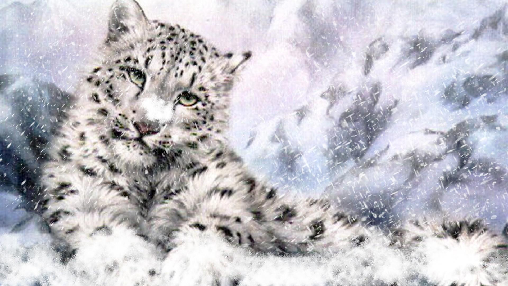 Snow Leopard Wallpapers HD - Wallpaper Cave