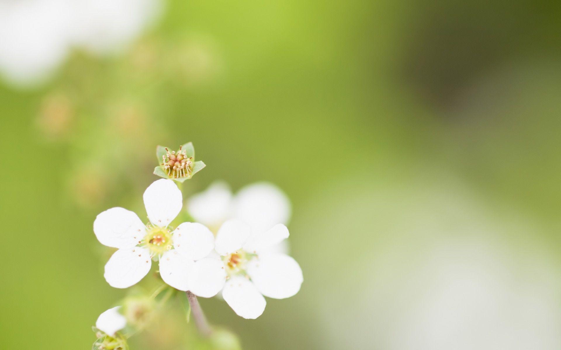 free simple spring flowers - photo #27