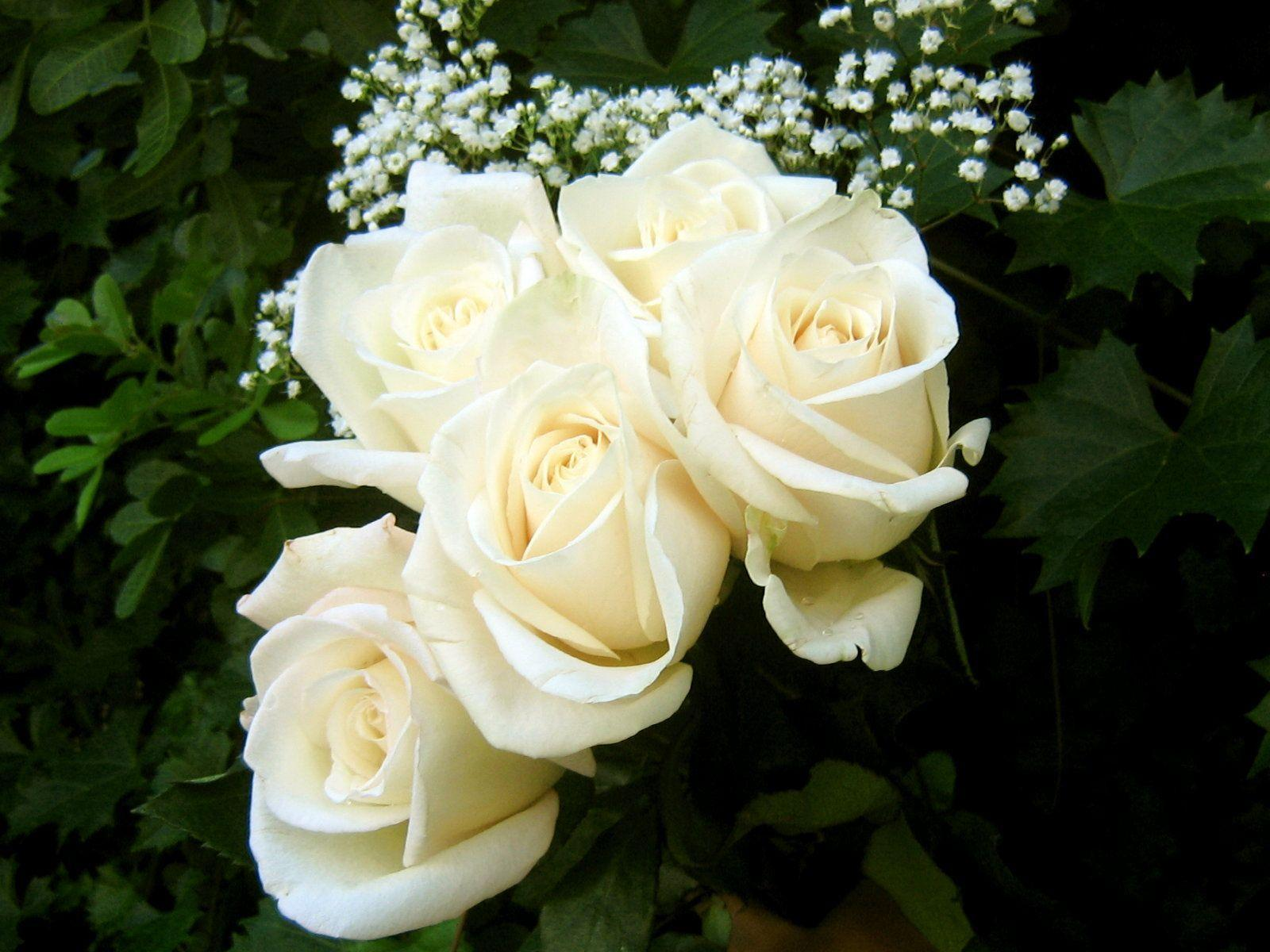 White Rose Wallpapers - Wallpaper Cave