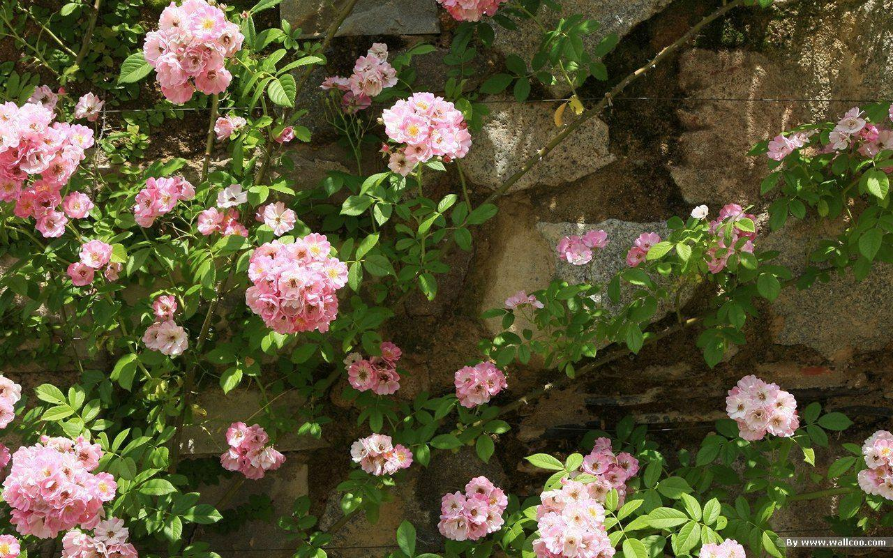 Beautiful Japanese Garden wallpapers 1280x800 NO.24 Desktop ...