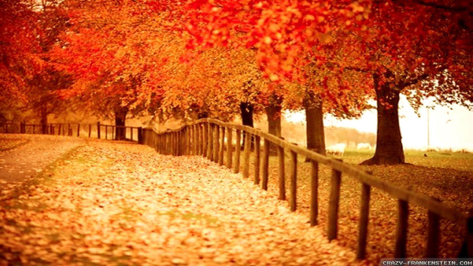 Beautiful Autumn Wallpapers - Wallpaper Cave