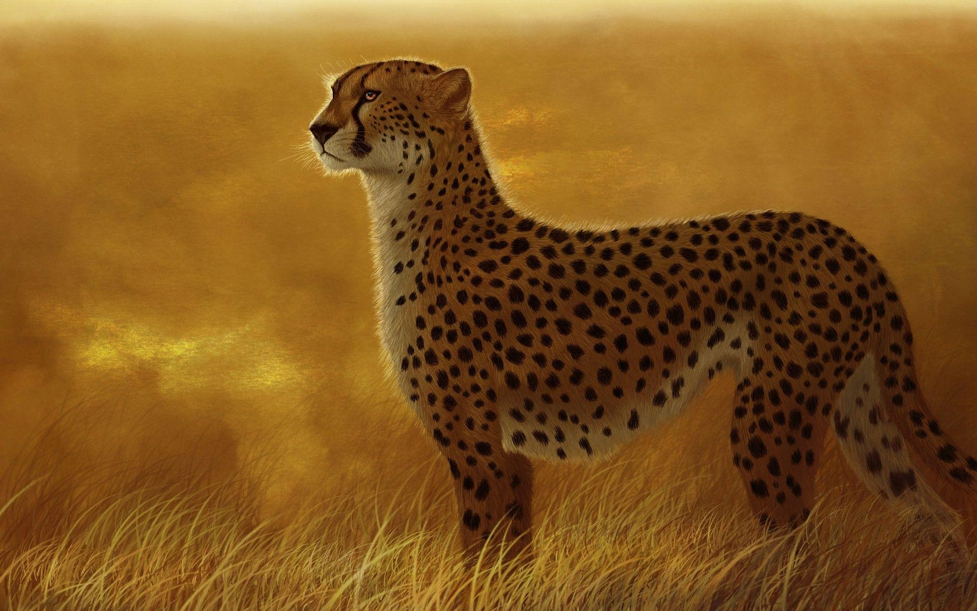 2 Cheetah Wallpapers | Cheetah Backgrounds