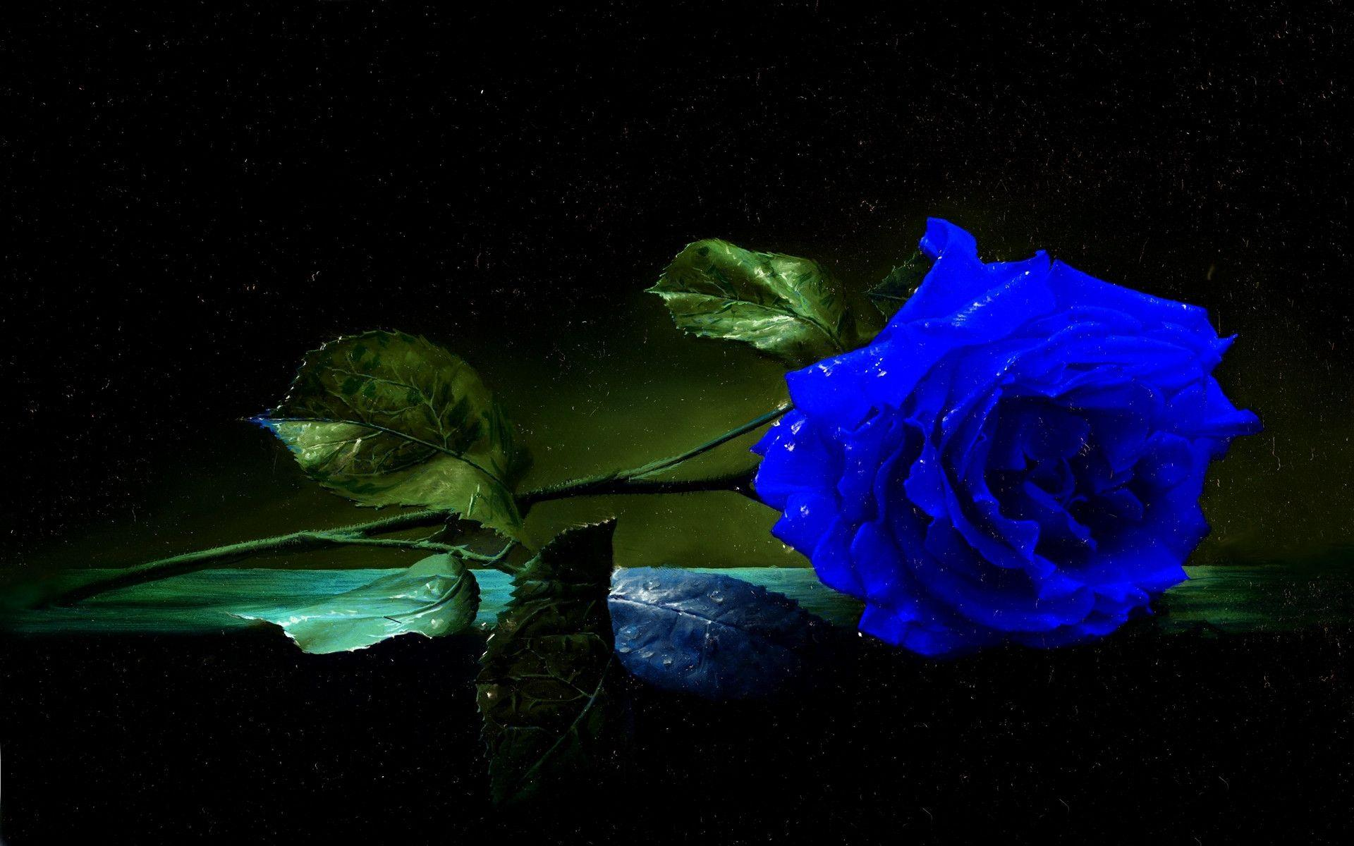 blue rose wallpapers full hd wallpaper search