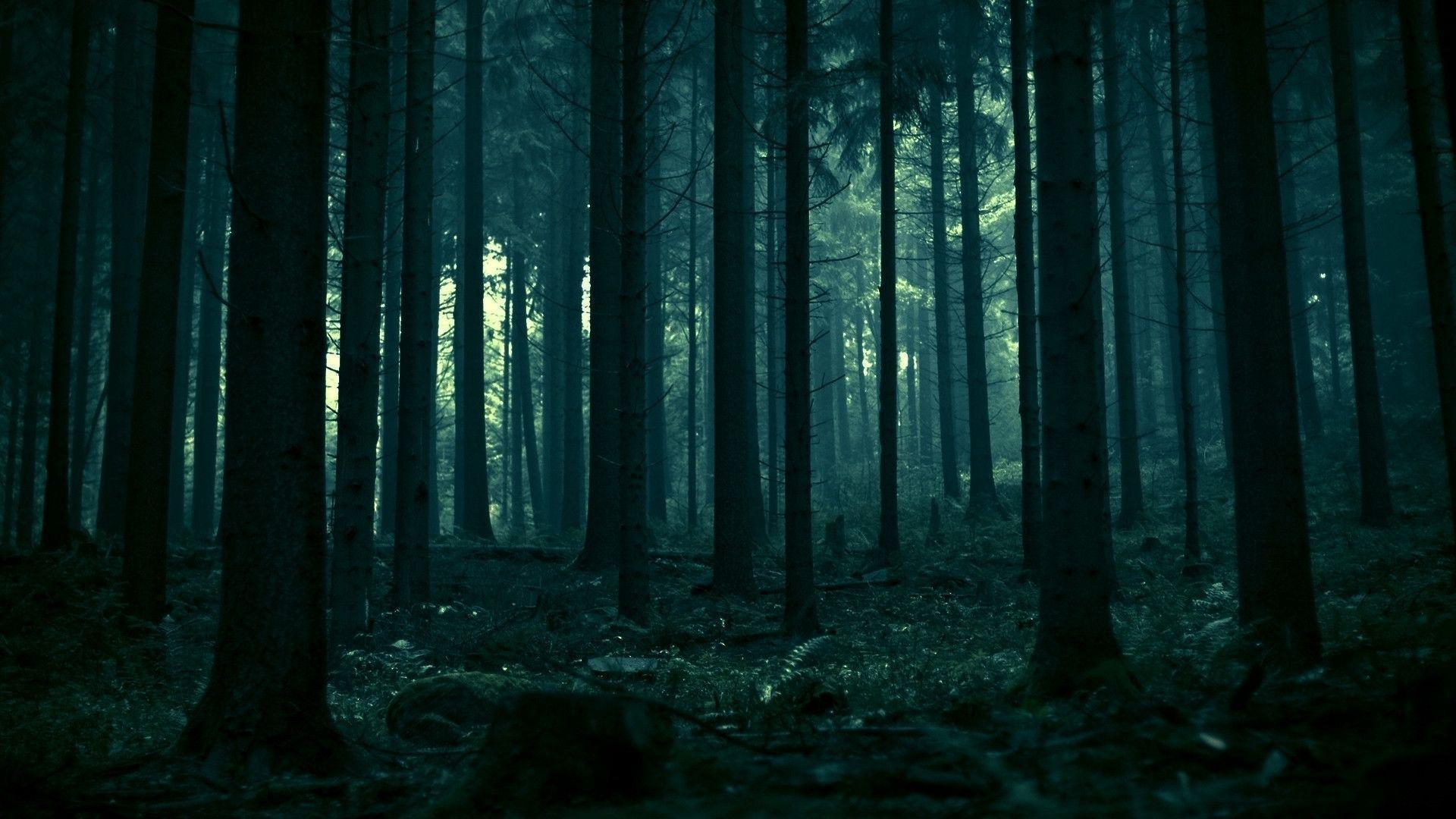 Permalink to Dark Forest Hd Wallpaper