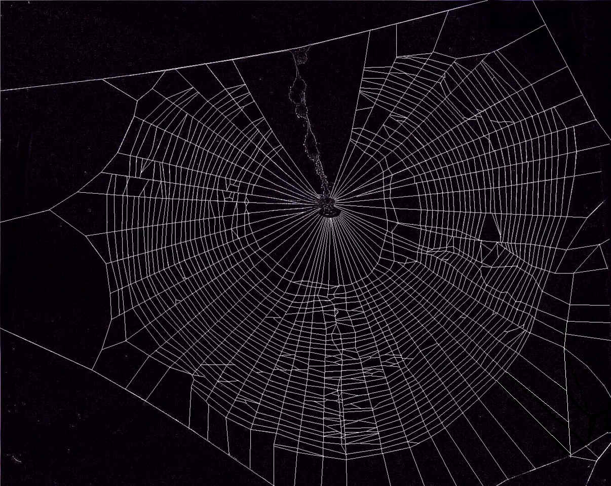Wallpapers For Spider Web Wallpaper