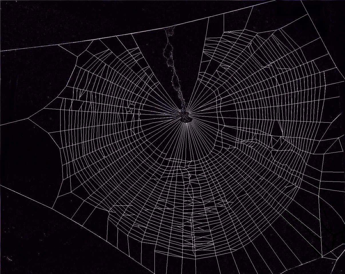 Spiderweb Wallpapers Wallpaper Cave