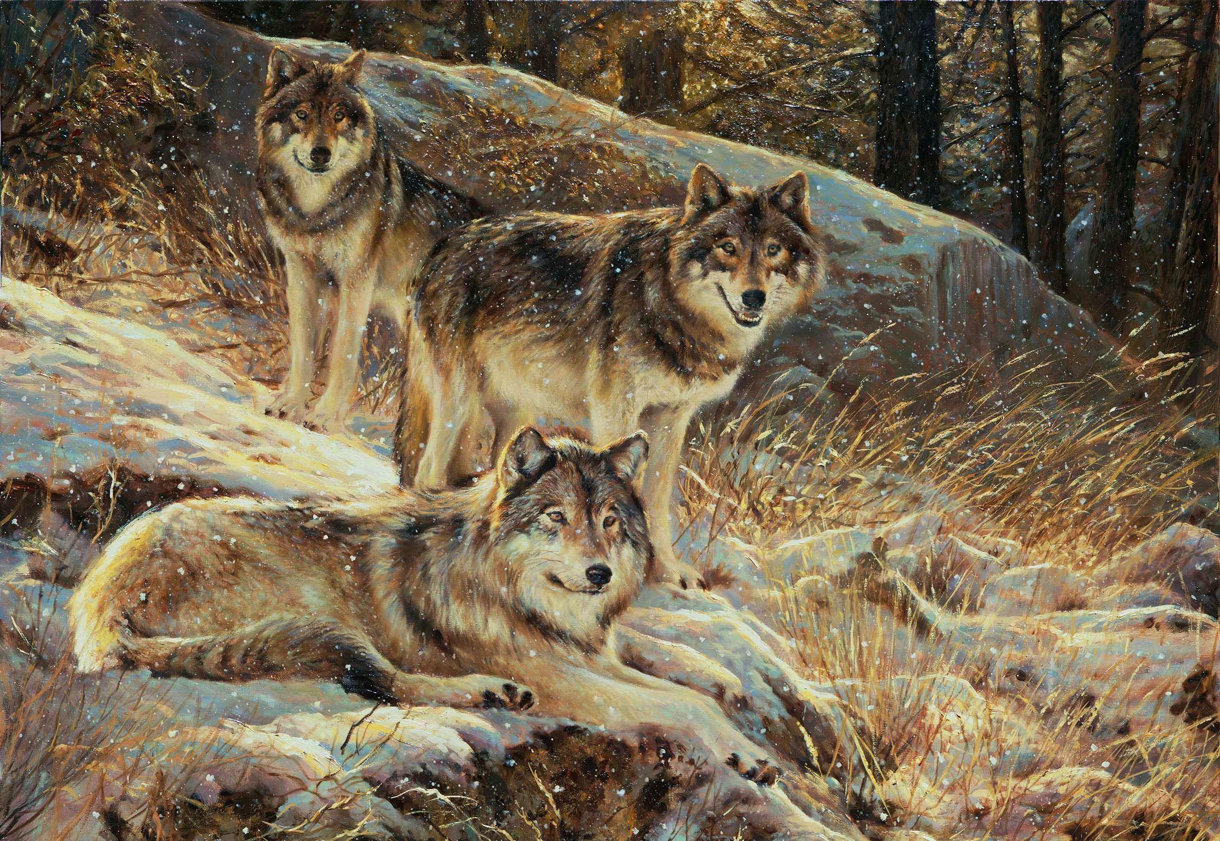 картинки волков исторические видов одежды протяжении