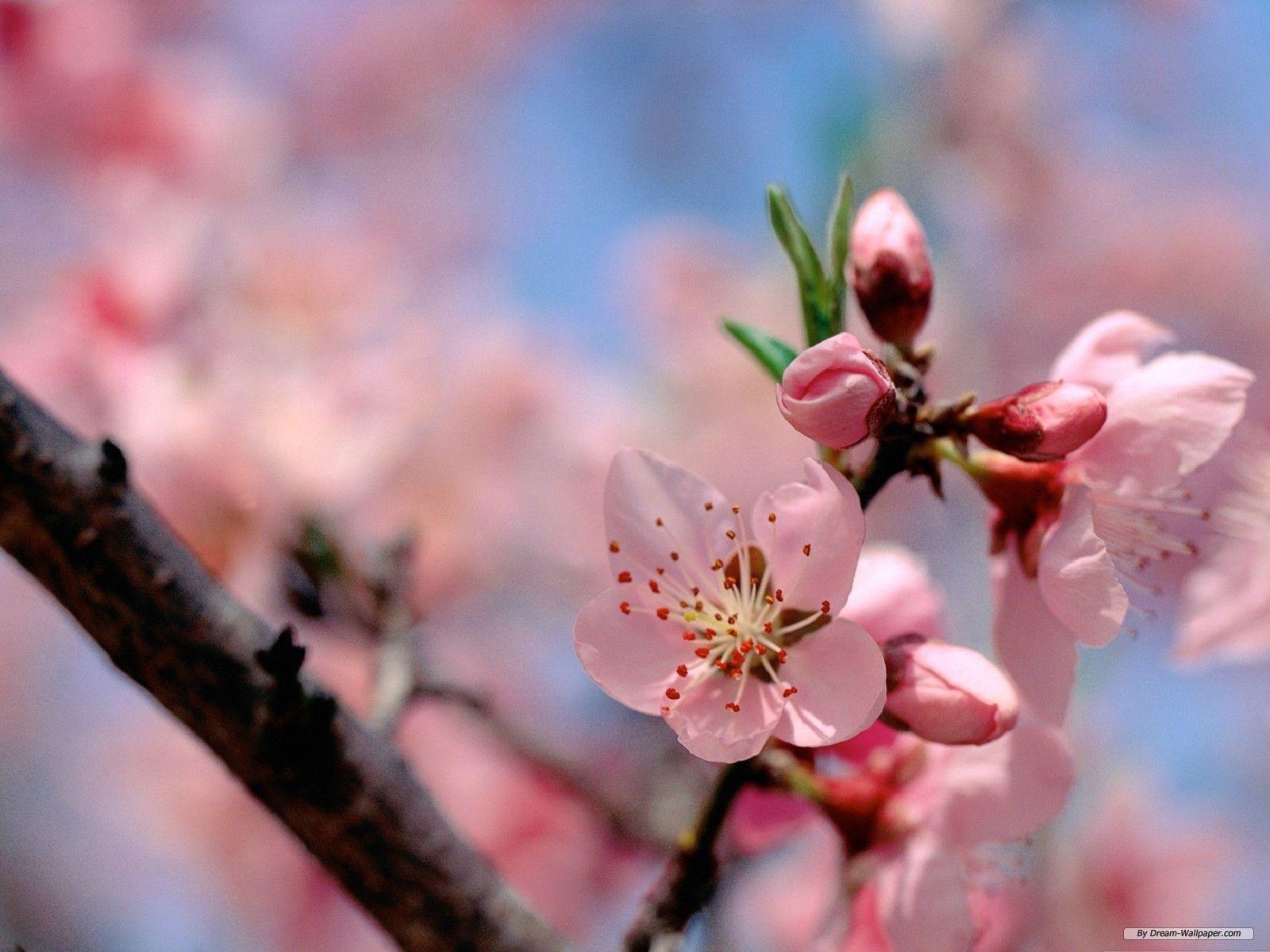 Free Desktop Wallpapers Spring Flowers - Wallpaper Cave