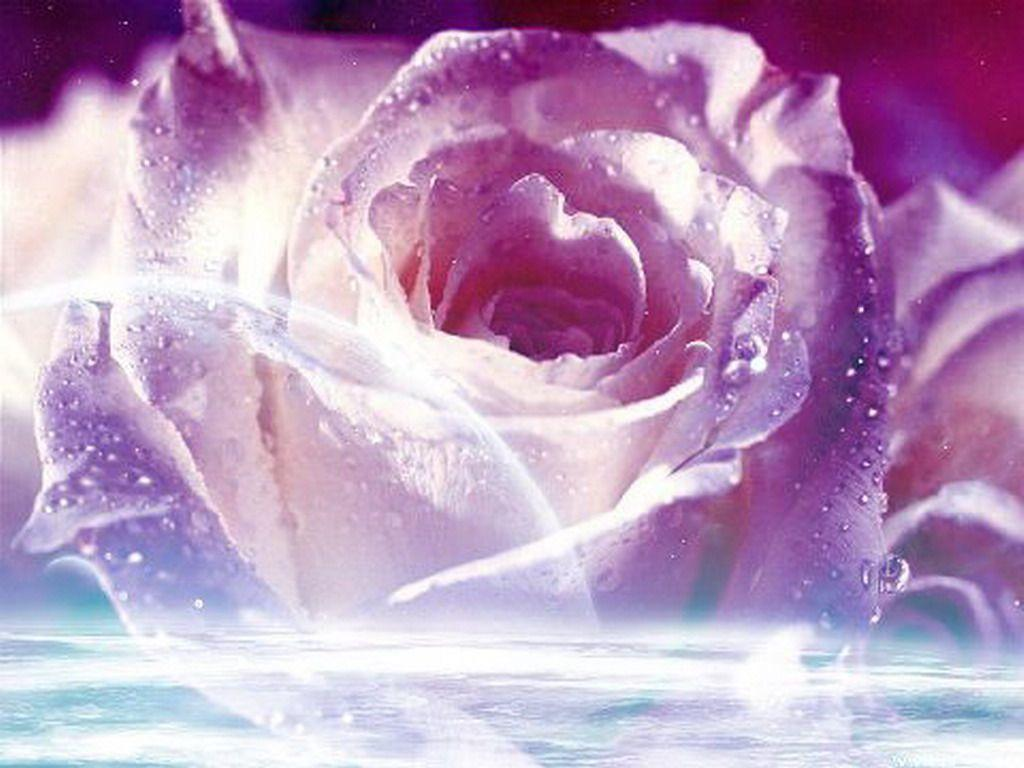 wallpapers of purple roses - photo #16