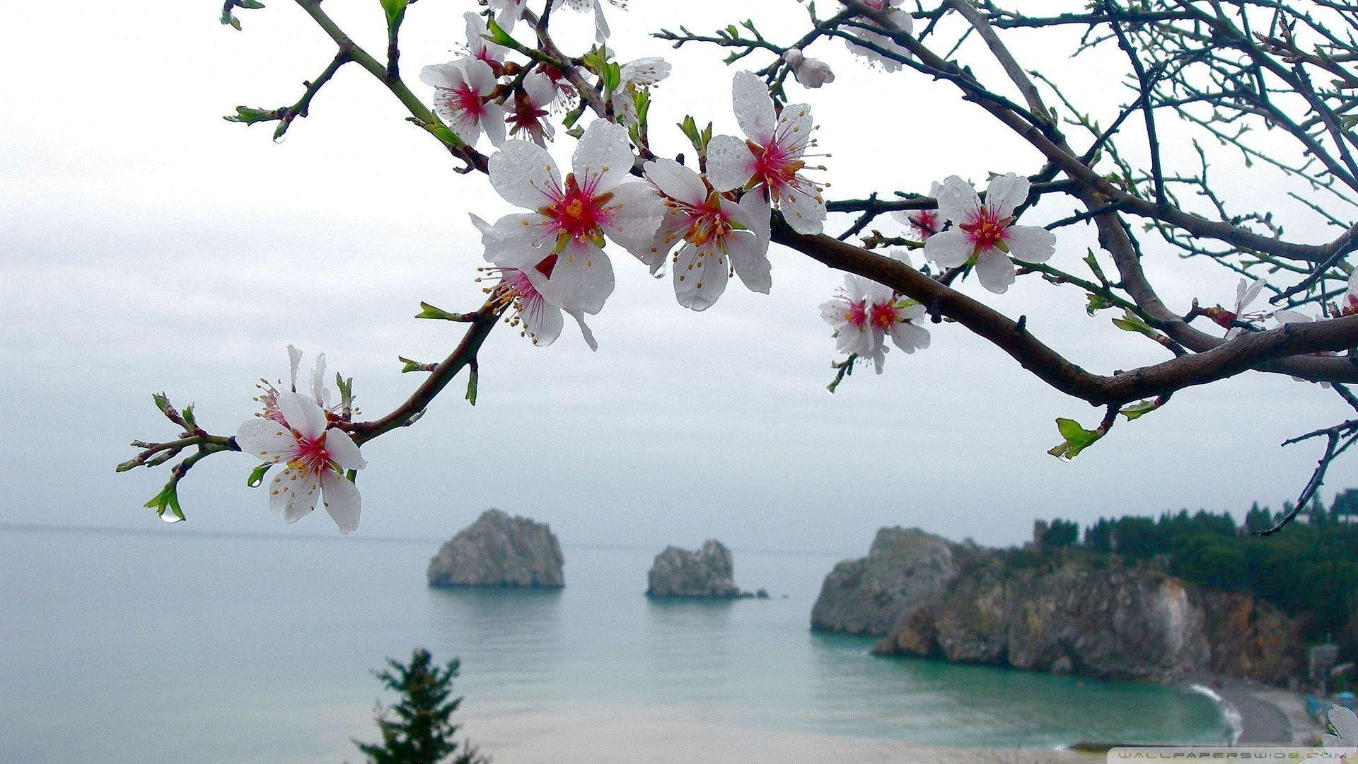 Spring Wallpapers 1920x1080 - Wallpaper Cave