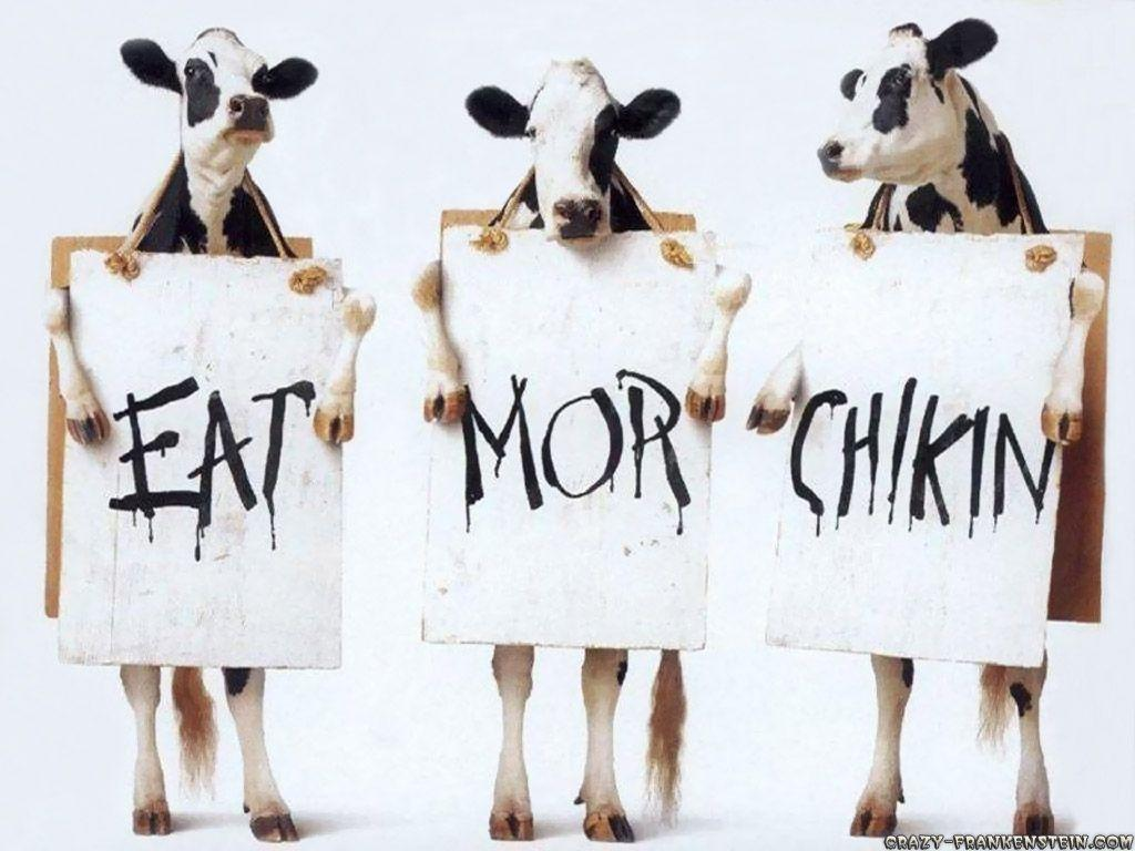 funny cow wallpaper - photo #6