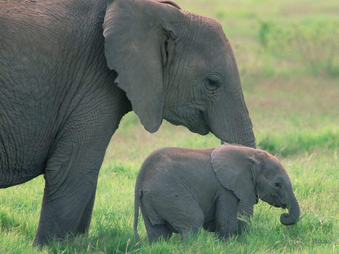 Baby Elephant Wallpapers - Wallpaper Cave