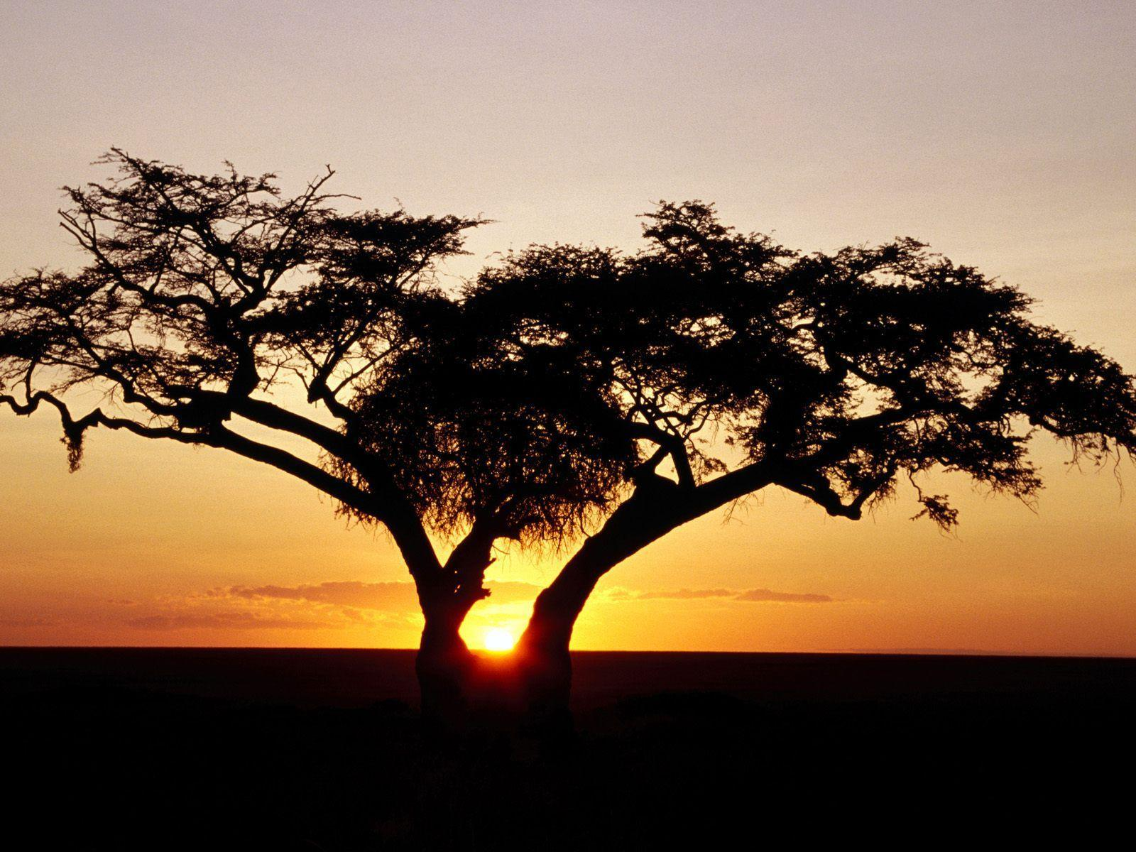 Sunrise, Africa desktop wallpaper « Desktopia.