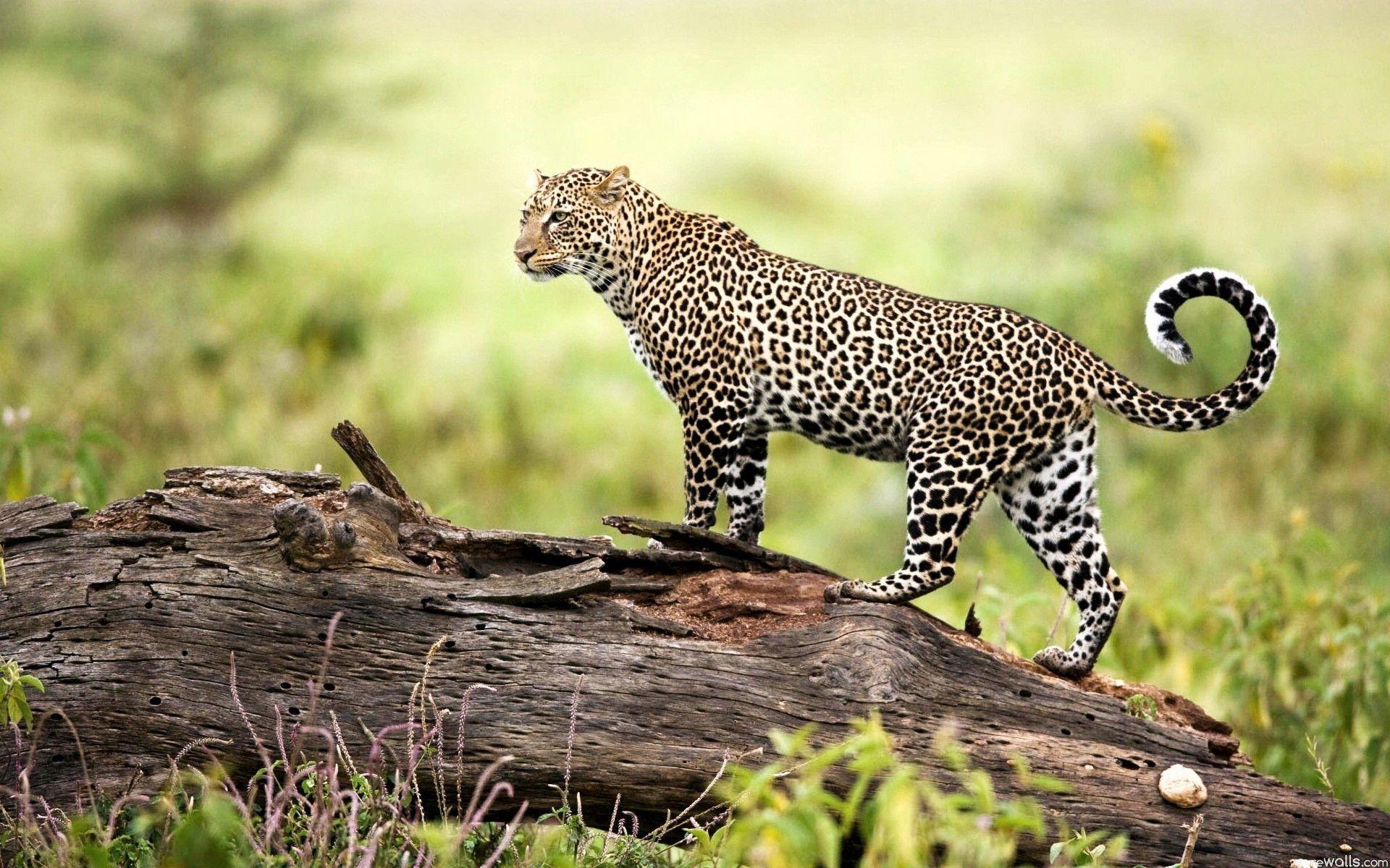 Wildlife Backgrounds For Desktop Wallpaper