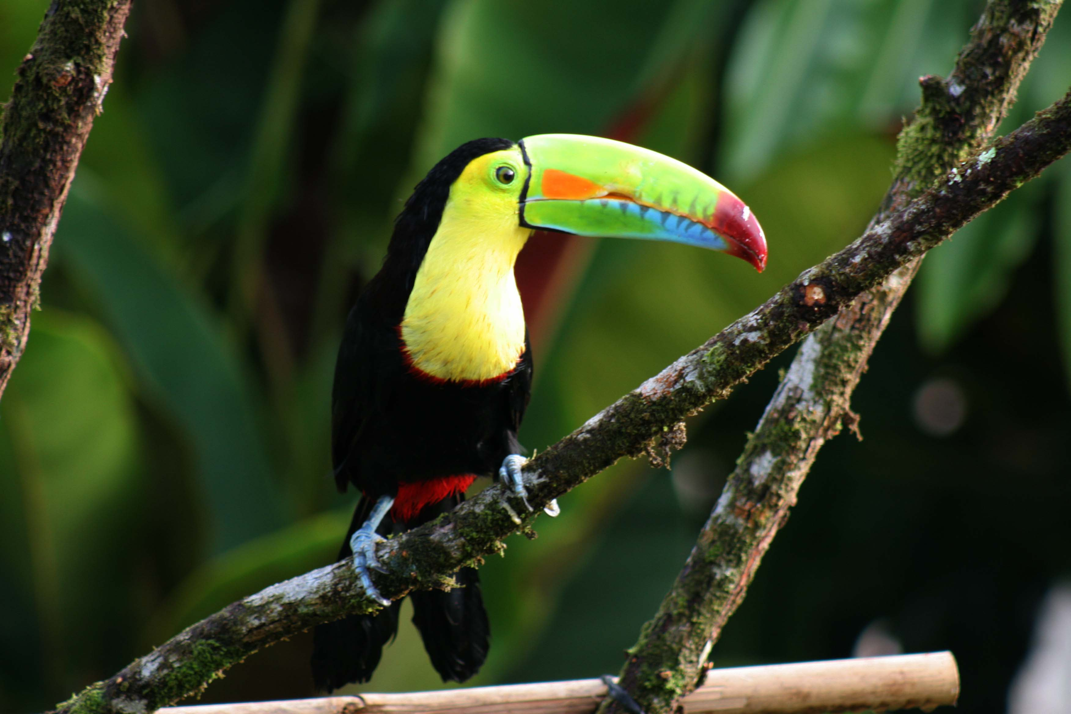 Toucan Wallpapers Wallpaper Cave HD Wallpapers Download Free Images Wallpaper [1000image.com]