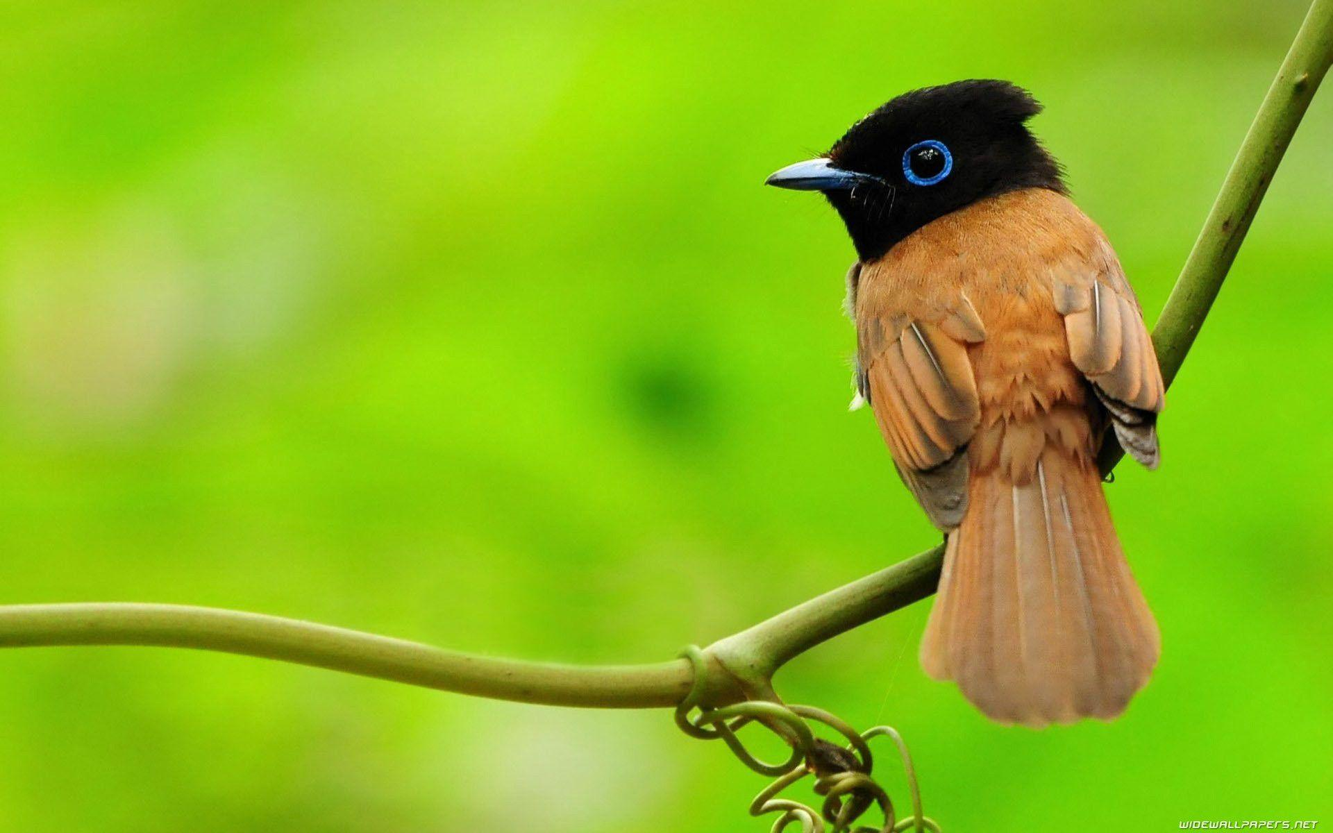 New wallpaper of birds - Dhoomwallpaper.com | Latest HD Wallpaper ...