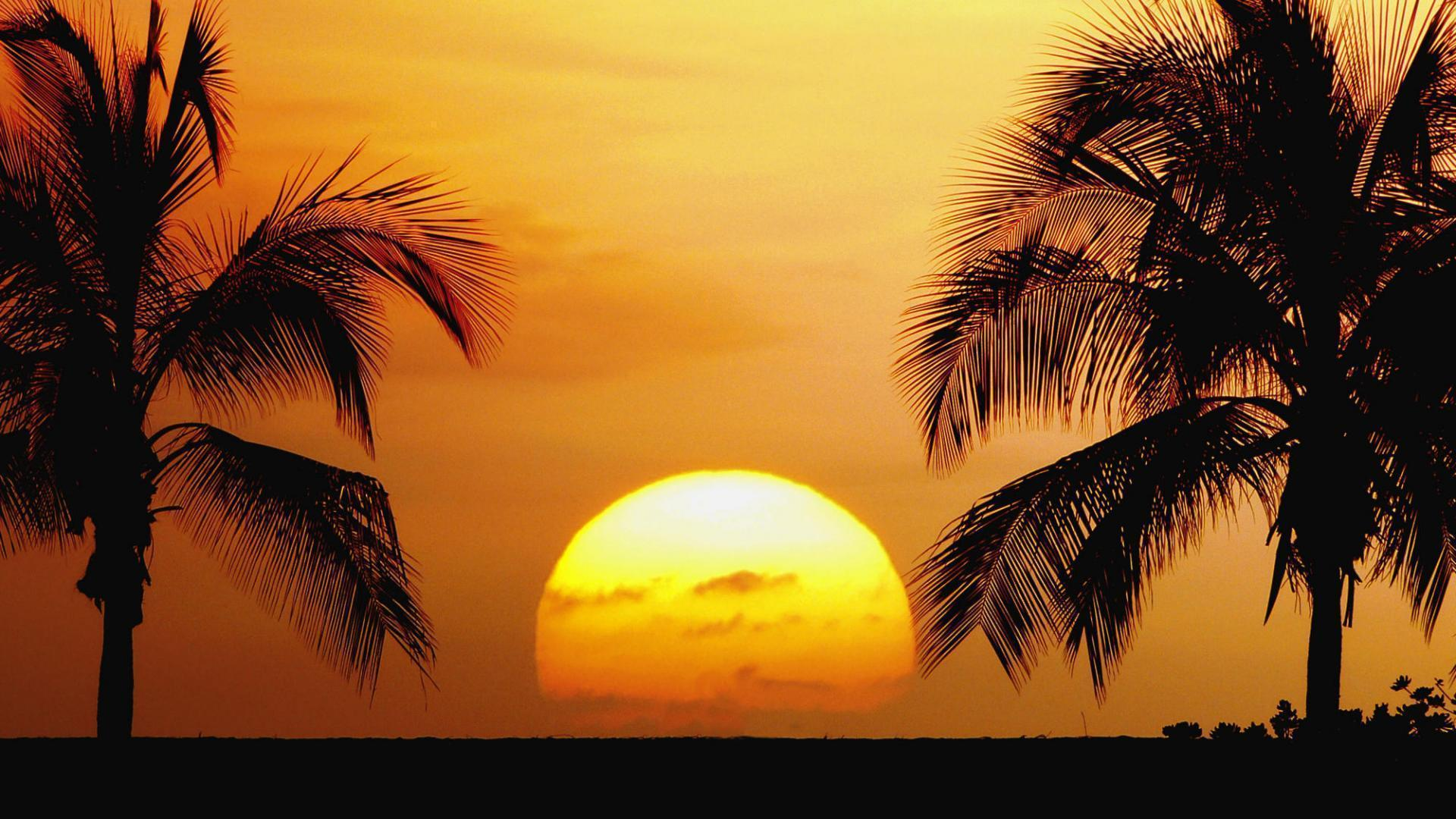 tropical landscape wallpapers - photo #49