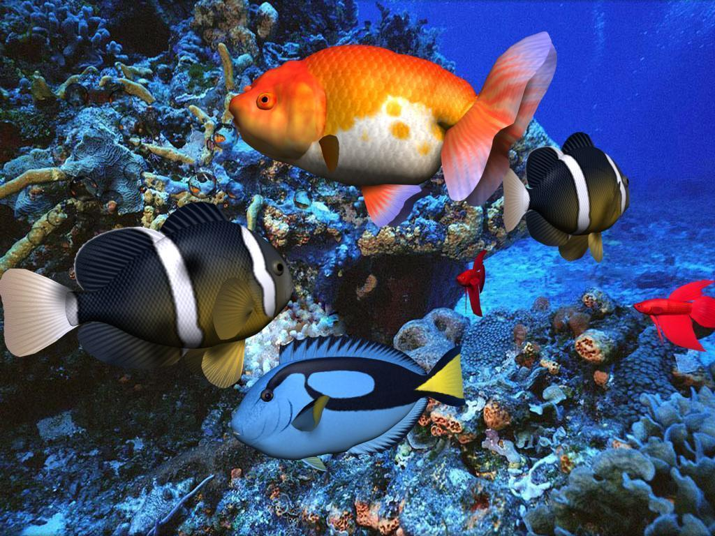 Tropical Fish Wallpapers 25416 Hd Wallpapers in Animals