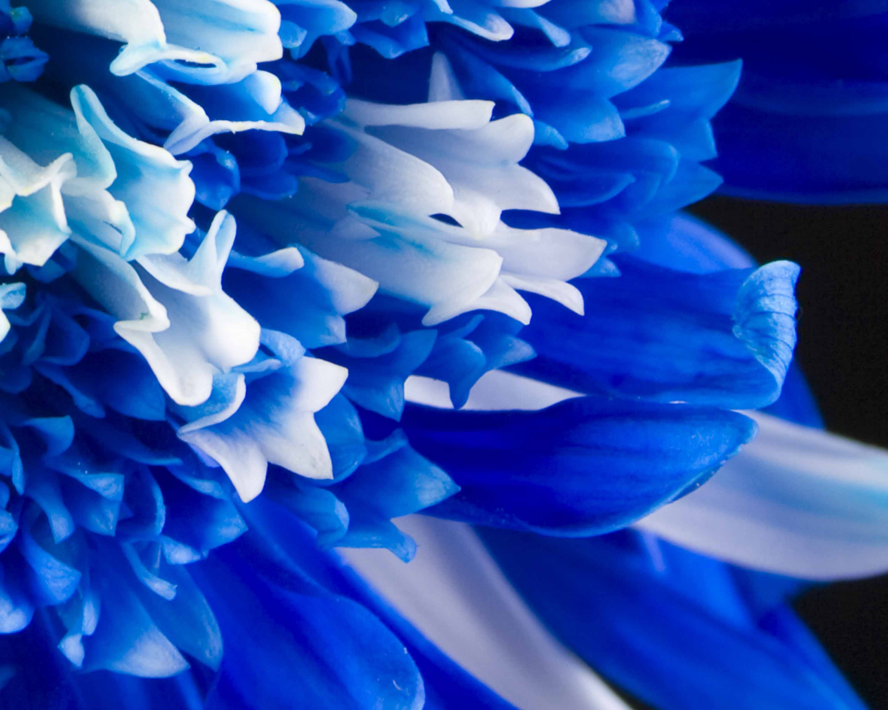 Blue Flowers Pictures And Names Widescreen 2 HD Wallpapers