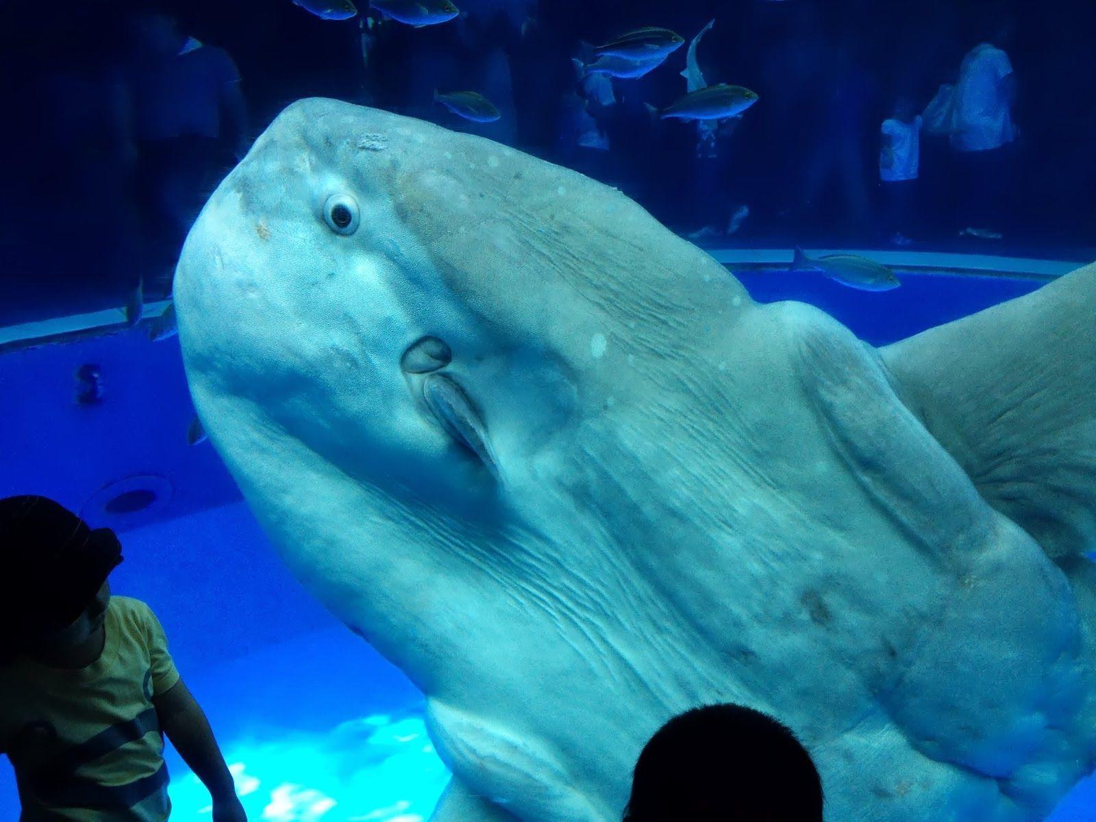 Beluga whales wallpaper - photo#45
