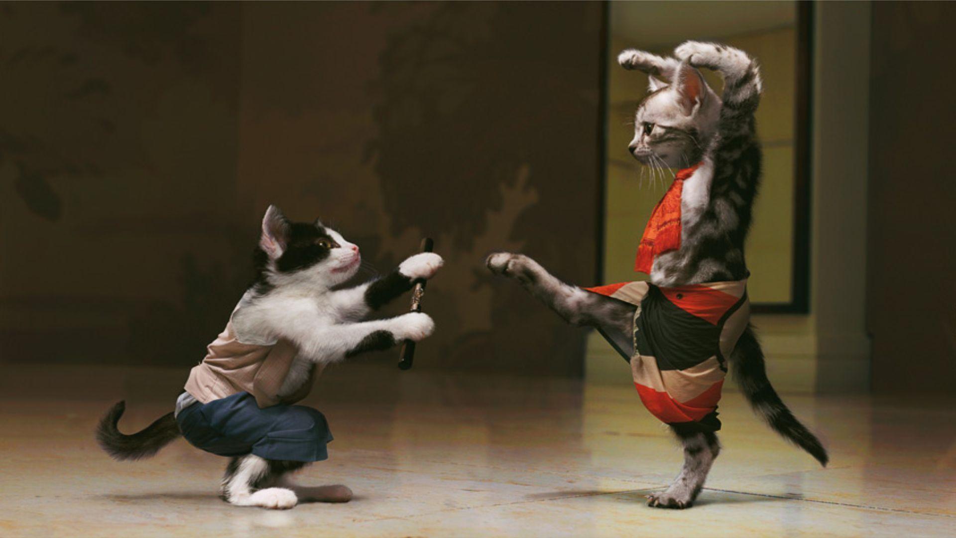 22 martial arts hd - photo #9