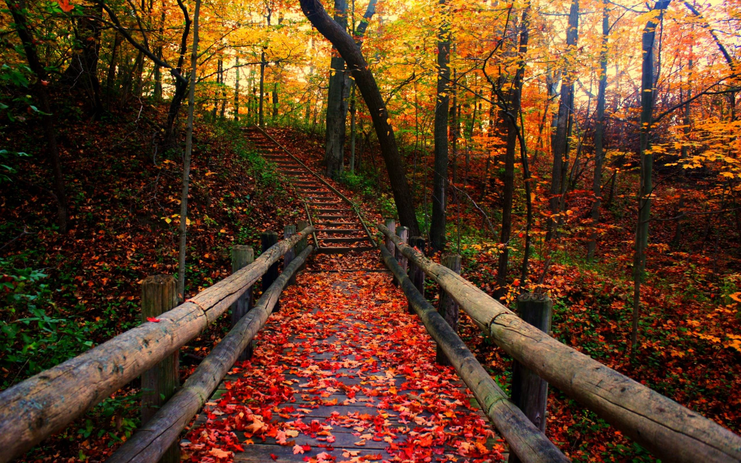 Fall Season Backgrounds - Wallpaper Cave