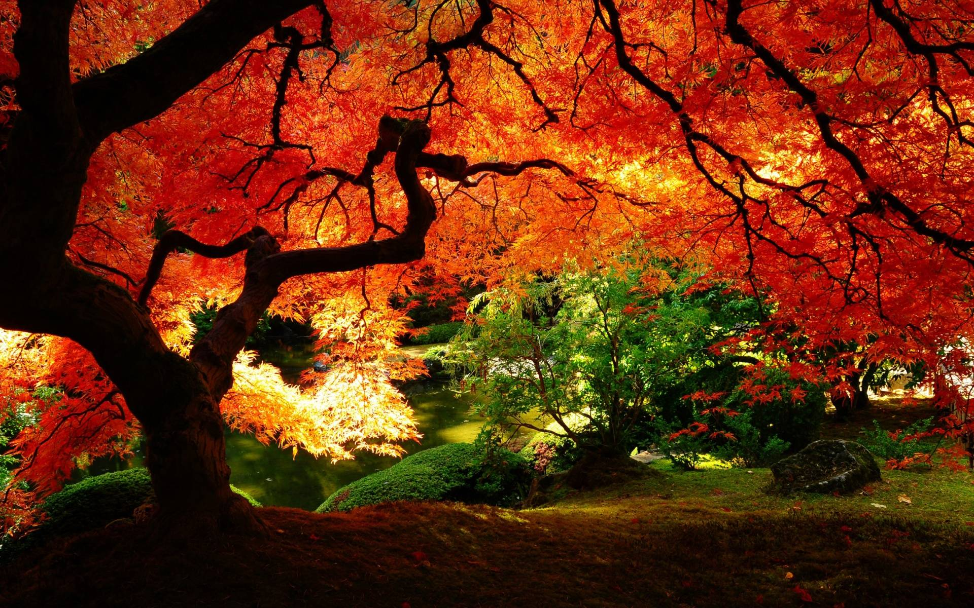 red leaves wallpapers wallpaper cave
