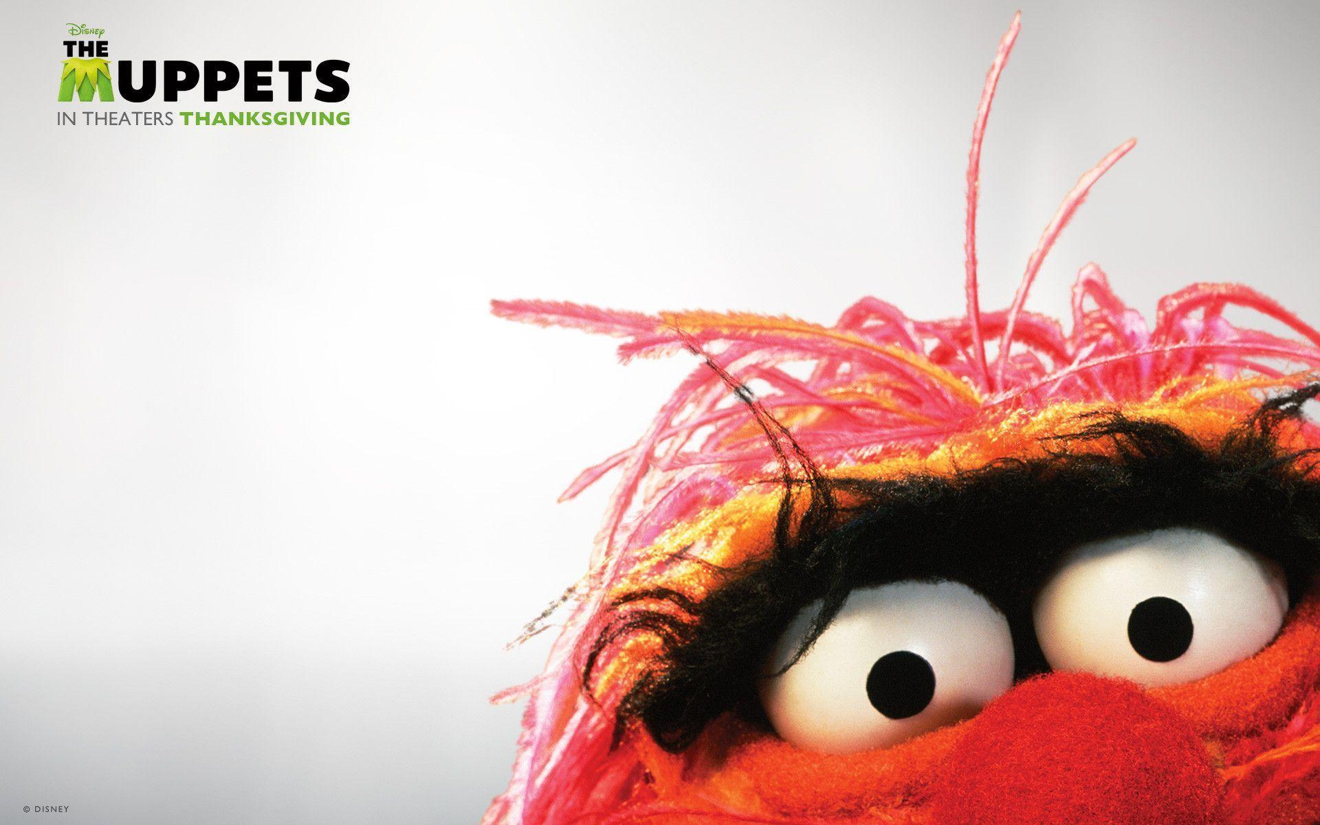 animal muppets wallpaper - photo #1