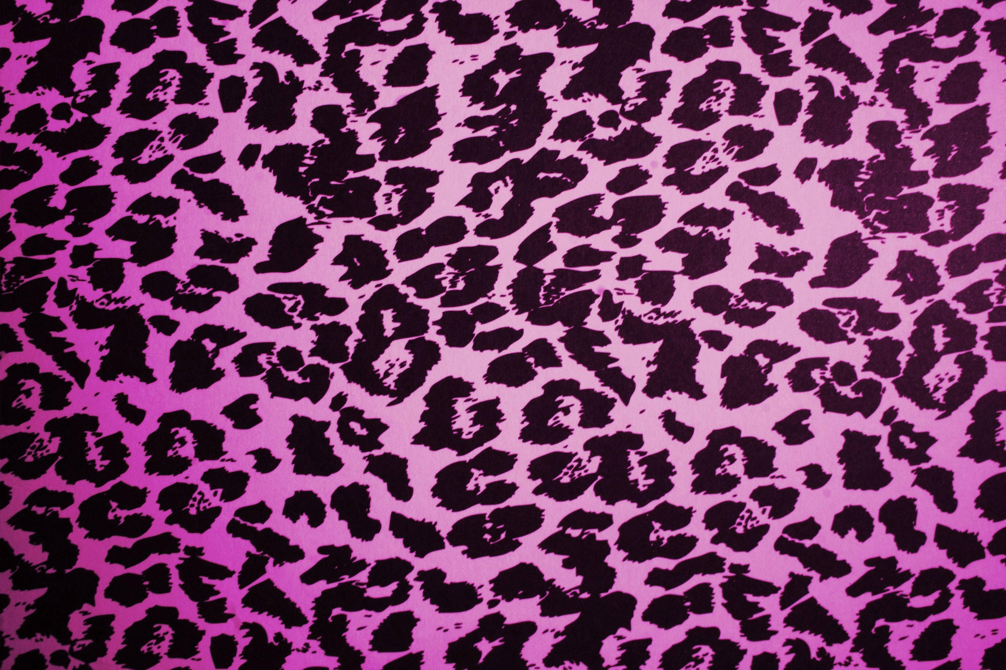 Pink Leopard Print Wallpaper For Bedroom Animal Print Desktop Backgrounds Wallpaper Cave