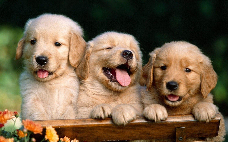 Boo Wallpaper Dog - WallpaperSafari