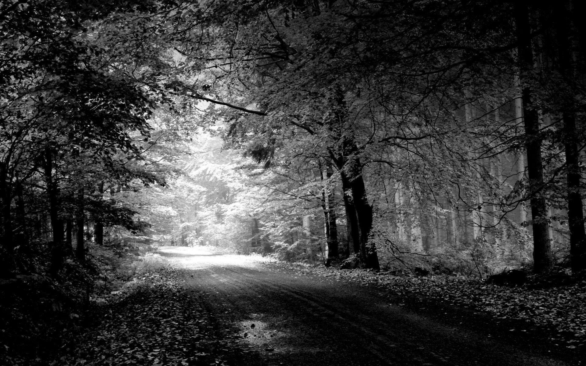 Download best black and white streat nature wallpaper pictures