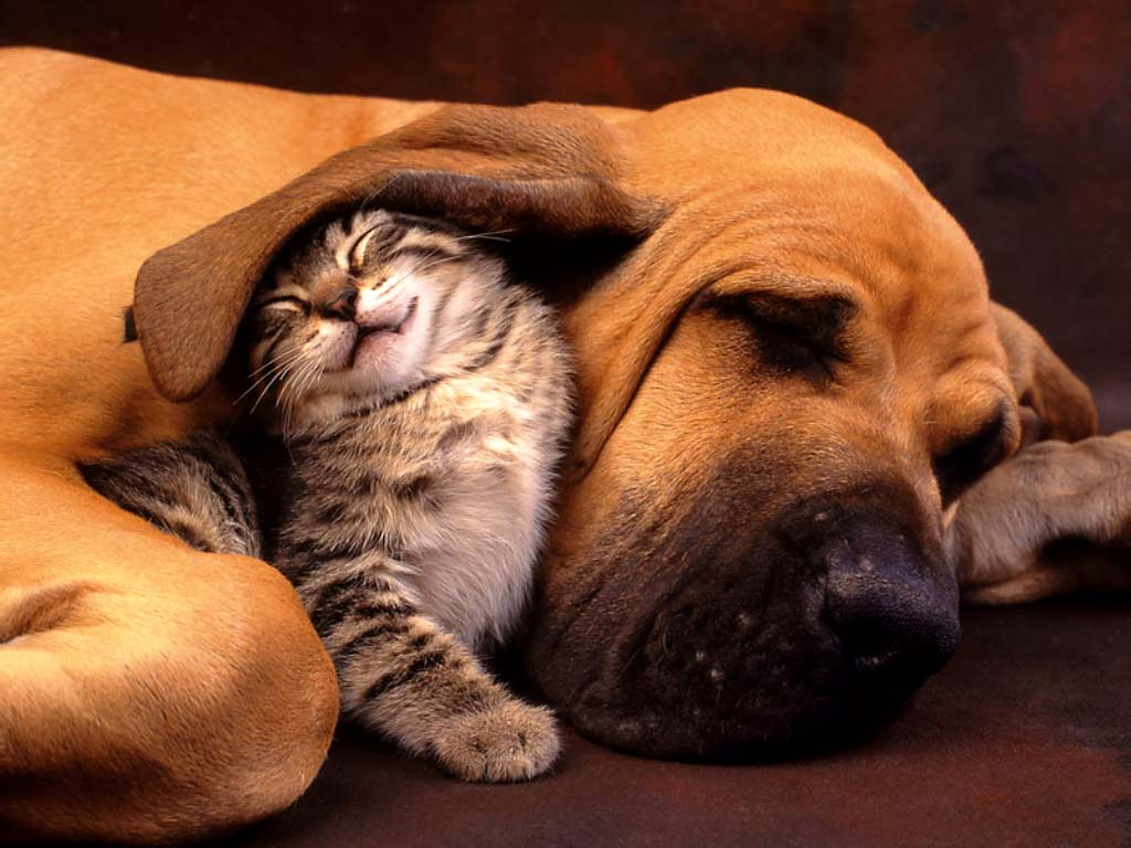 Desktop Wallpapers · Gallery · Animals · Cat and Dog
