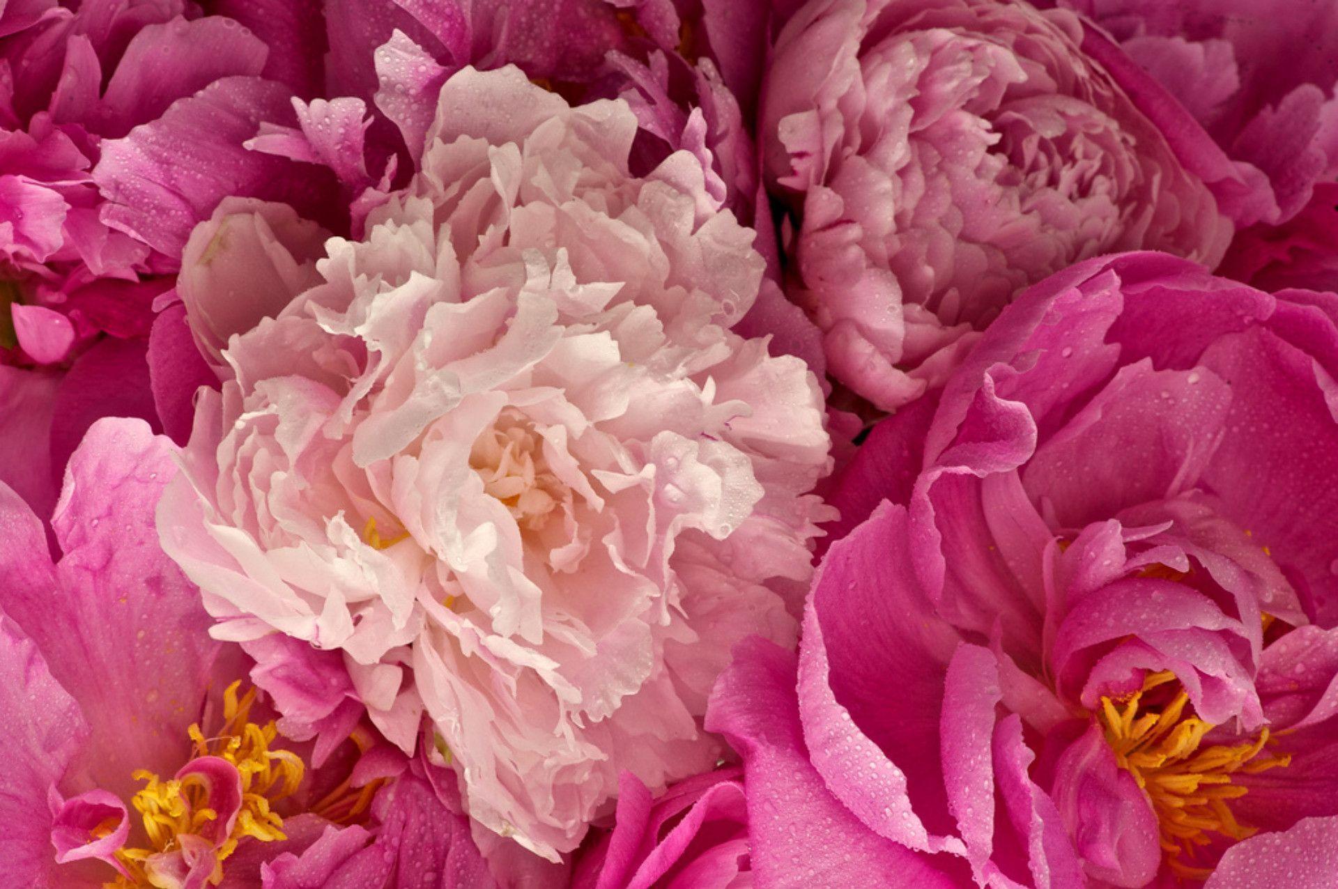 Какими цветами украсить клумбу фото асимметрия