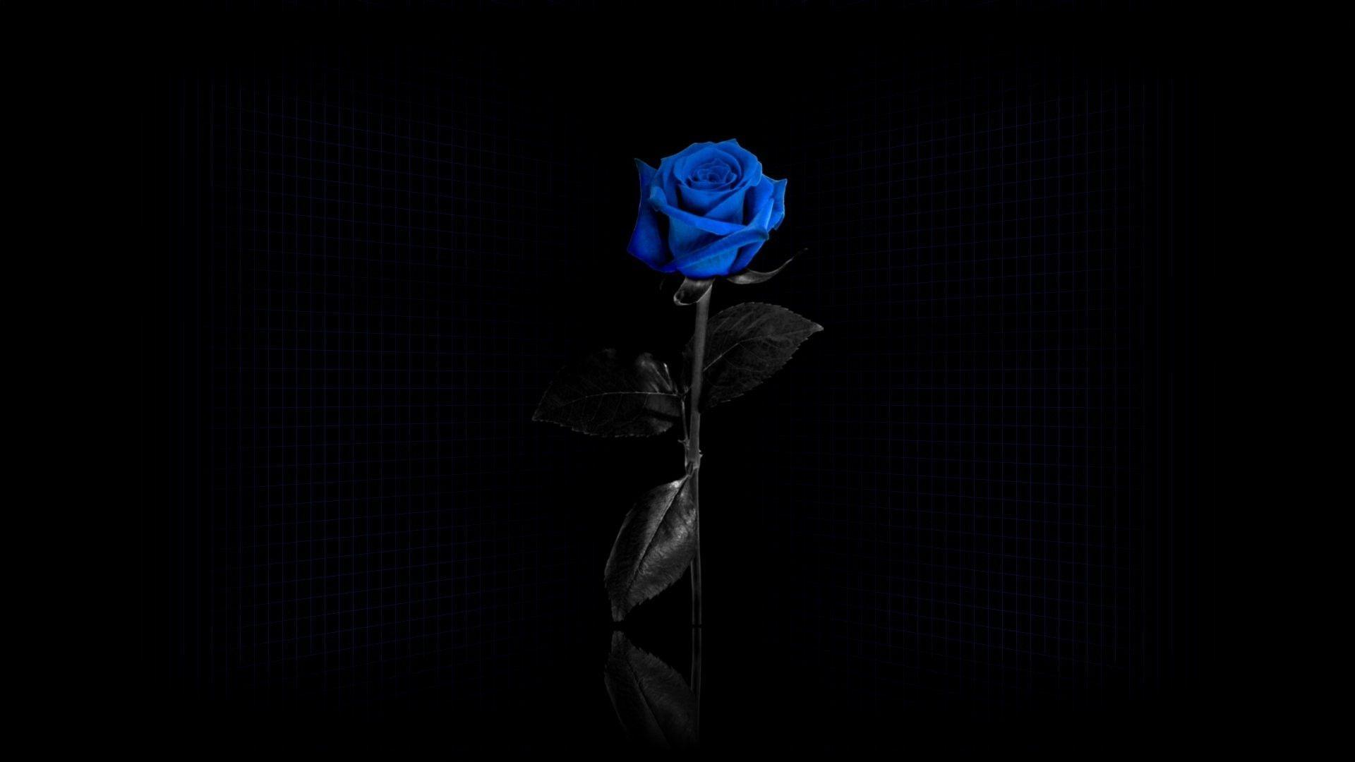 Blue Rose Wallpapers - Wallpaper Cave