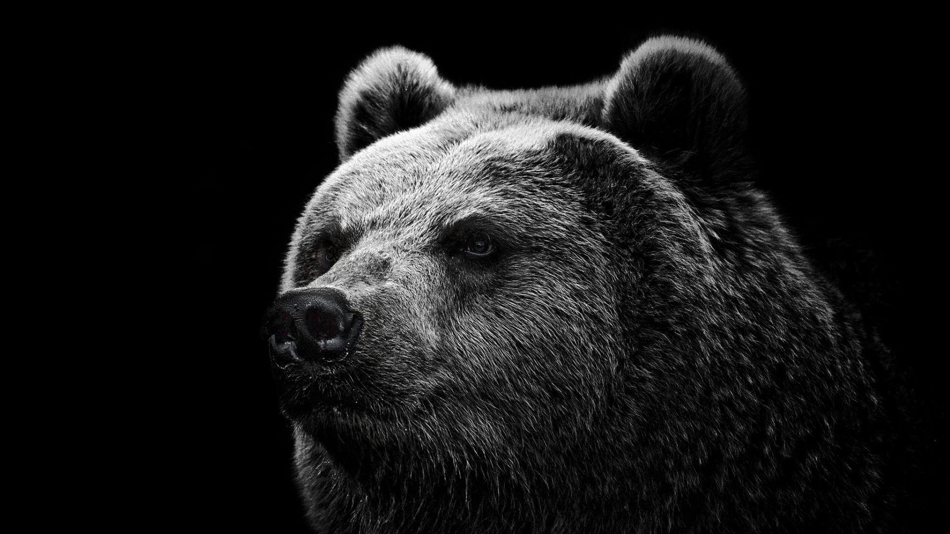 Hd Wallpapers Grizzly Bear Wallpaper Wild Big Grizzly 1280 X 960 ...