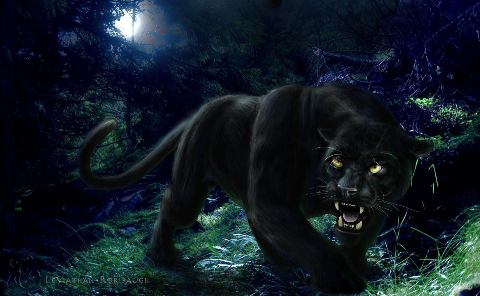 black leopard backgrounds - photo #26