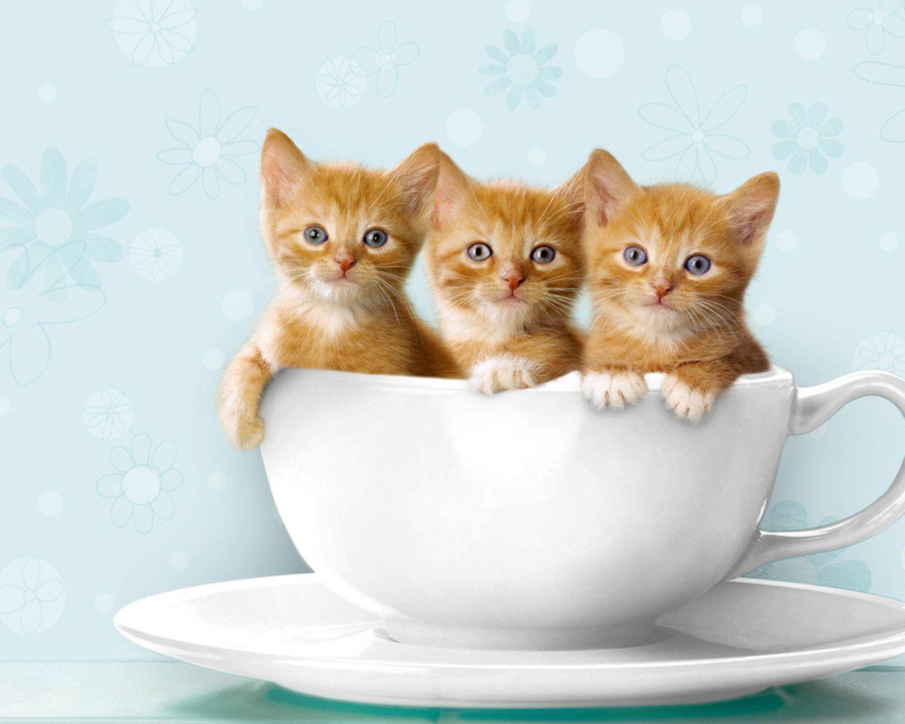 Cute Cats Wallpapers Wallpaper Cave