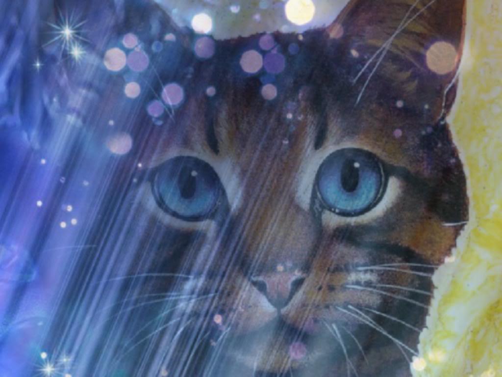 Warrior Cats Wallpaper Desktop