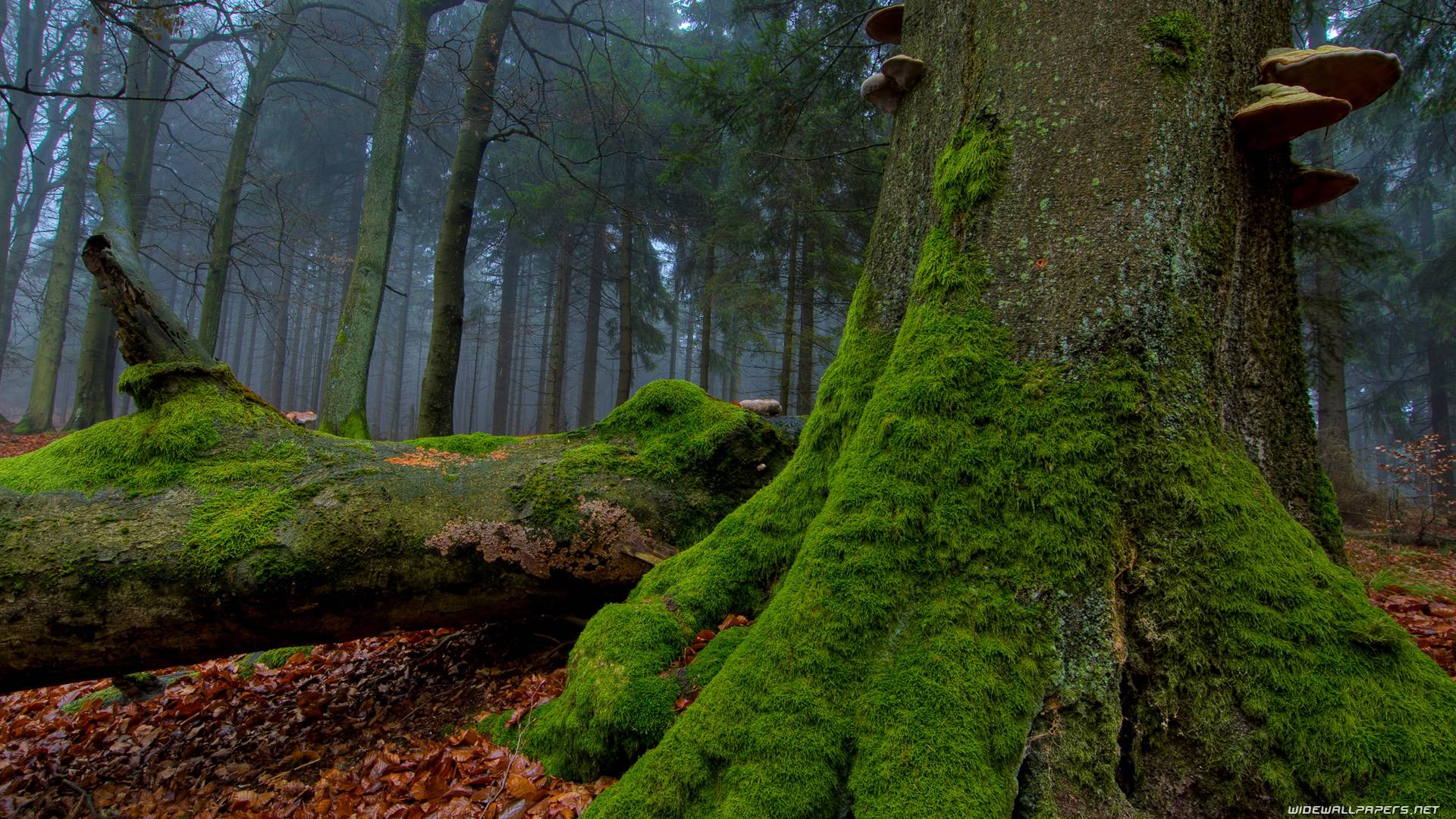 Forest Hd Wallpapers 4pda Wallpapers