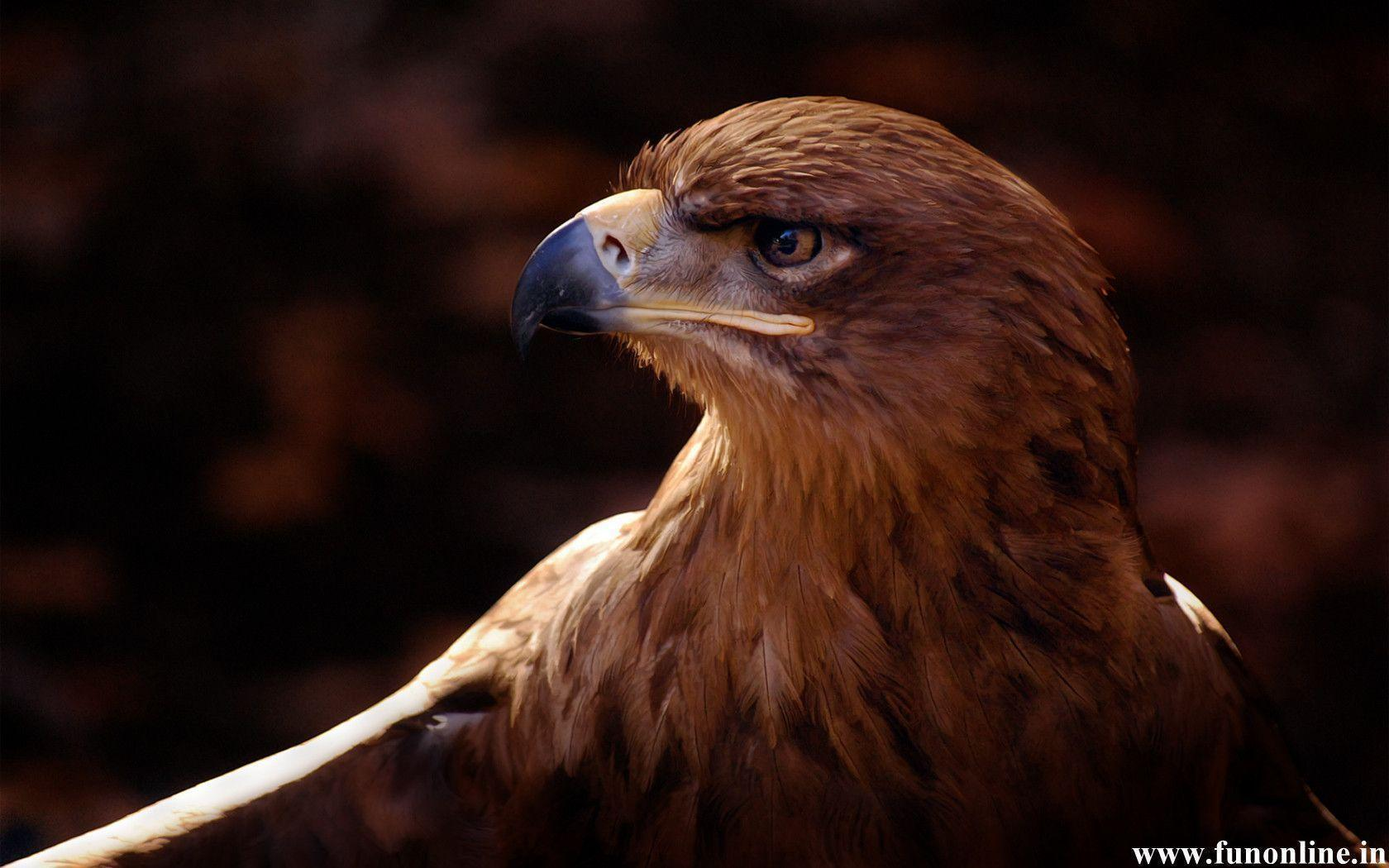 eagles wallpaper - photo #48