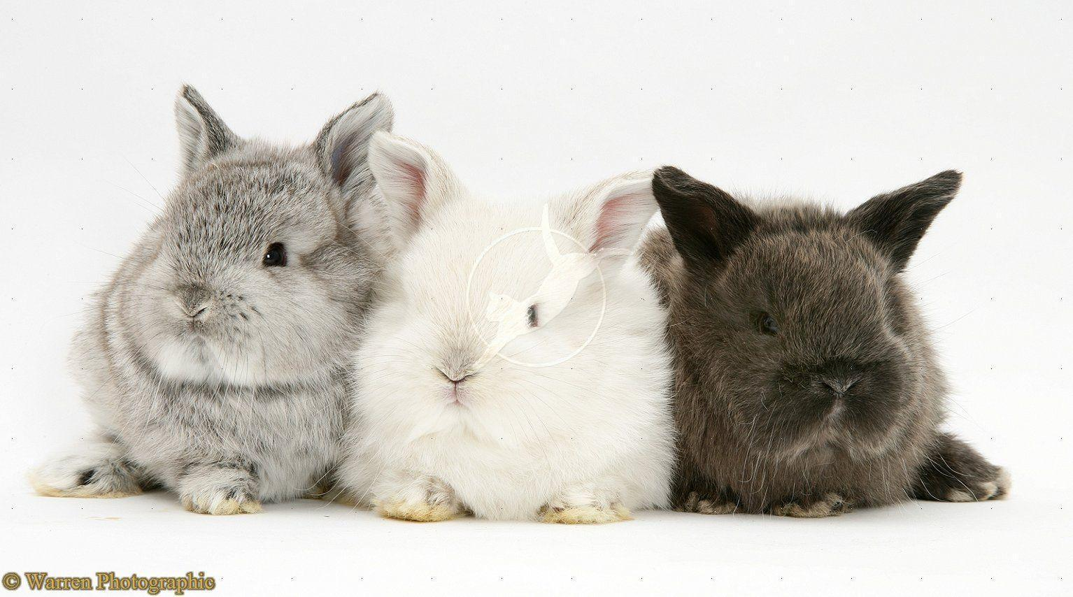 Cute Bunny Wallpapers - Wallpaper Cave - photo#24