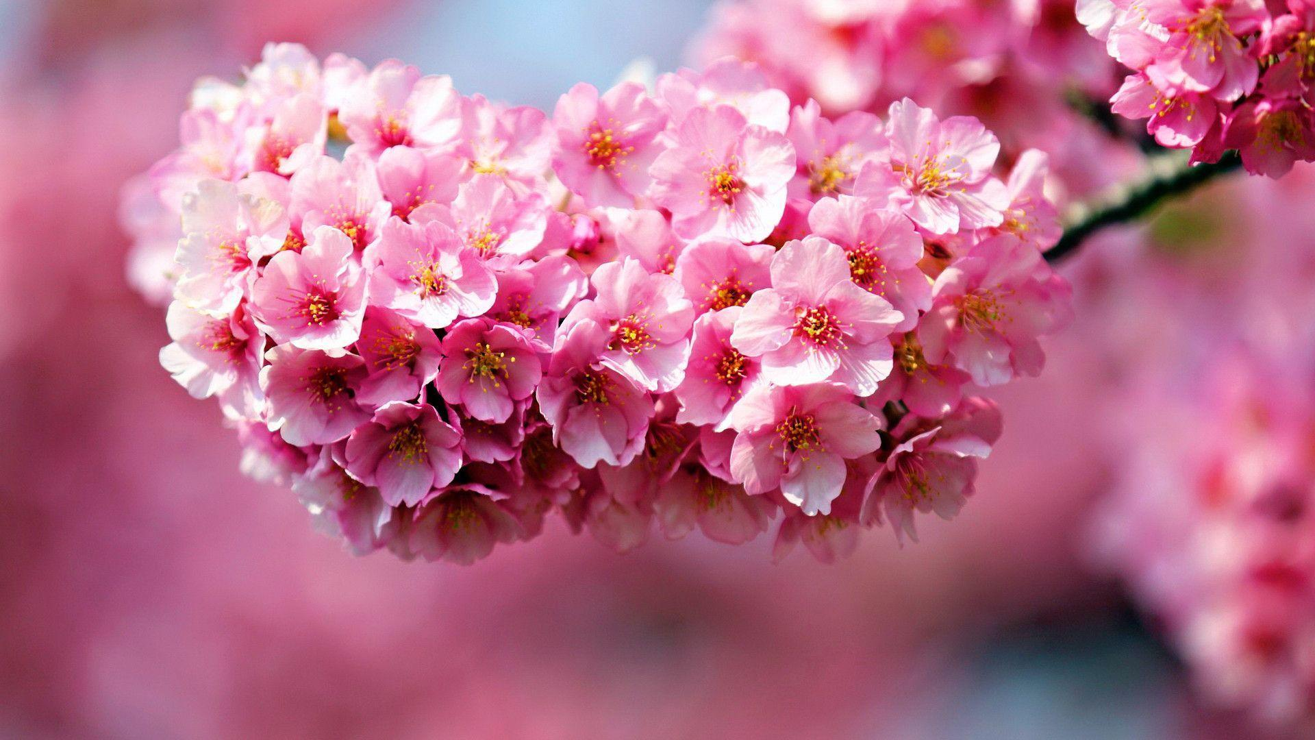 Flower Image Wallpapers
