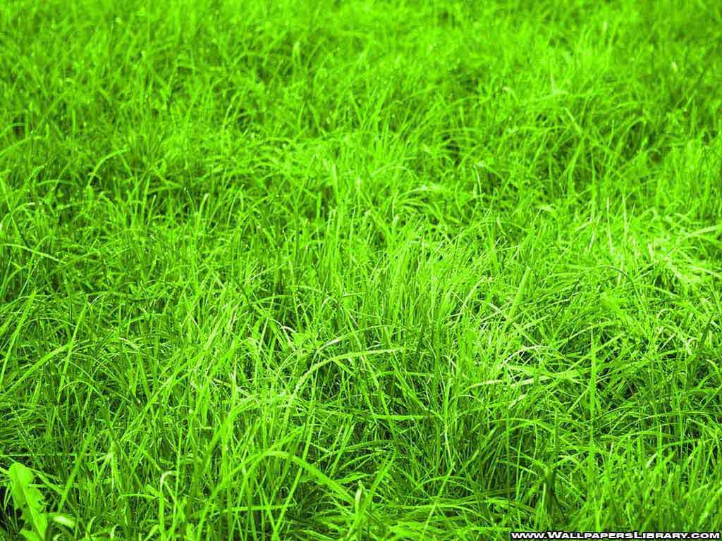 Green Grass Wallpaper Amazing Wallpaper Hd Library