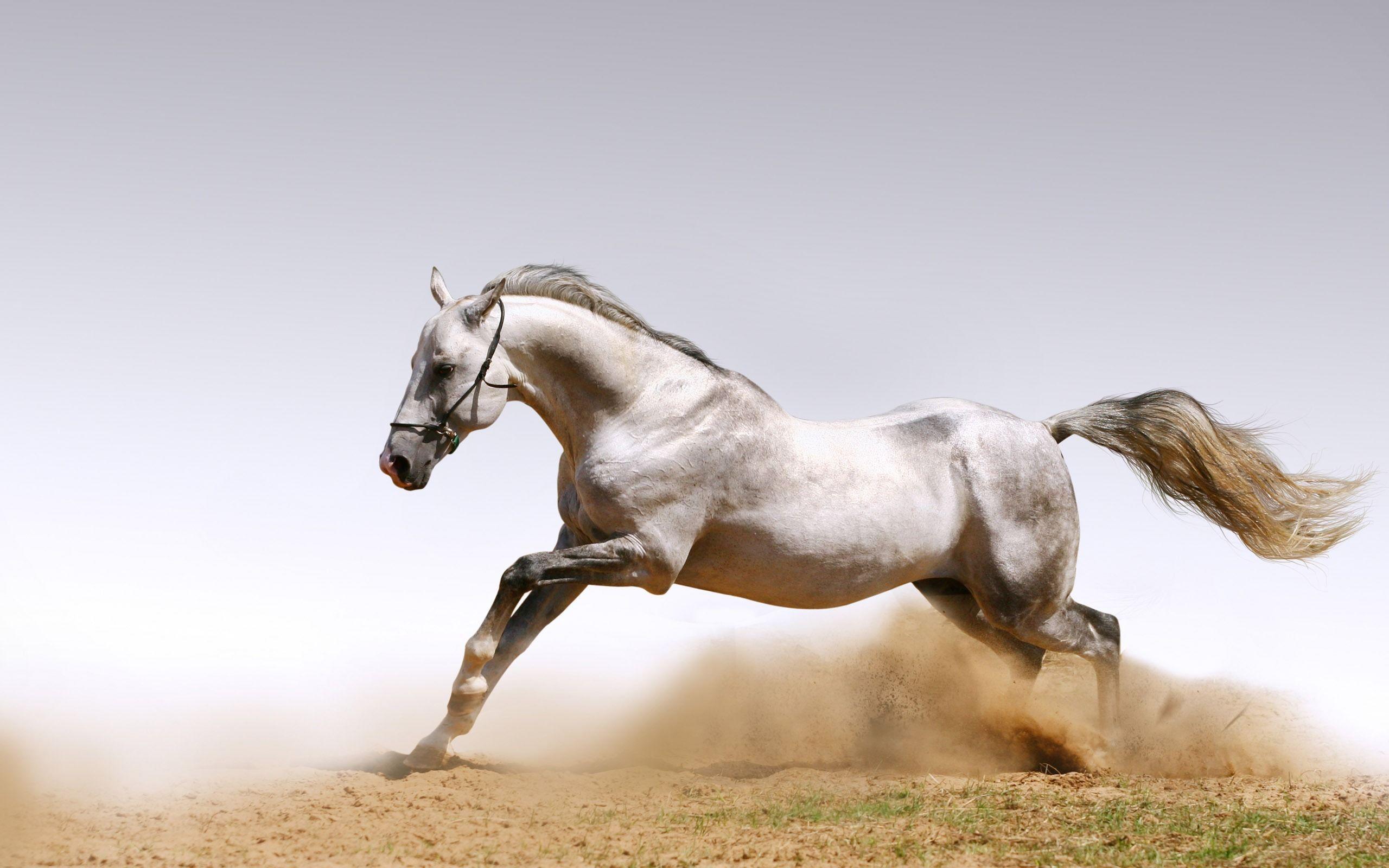 white horse desktop wallpapers hd wallpapers inn