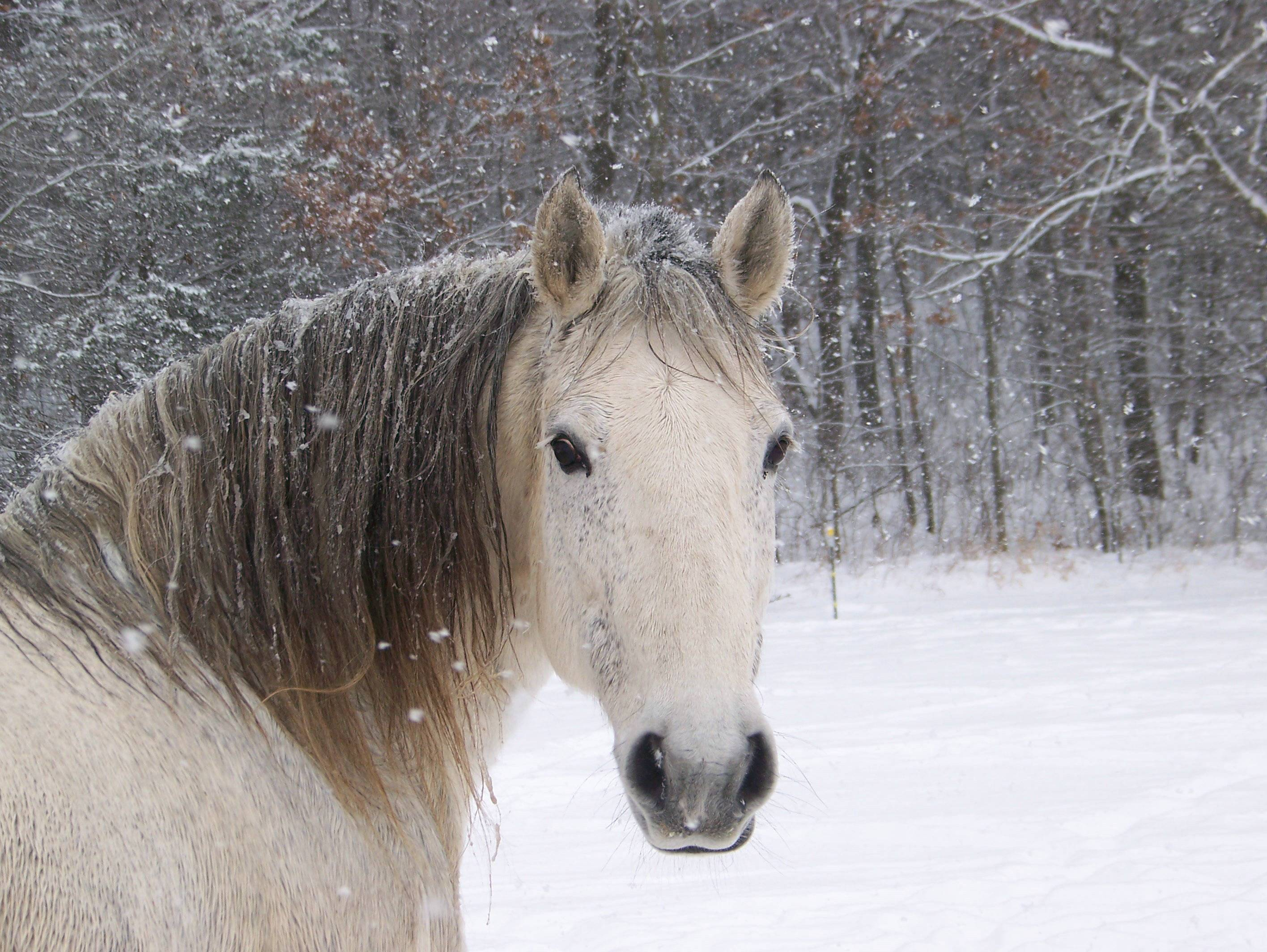 horse cute wallpapers