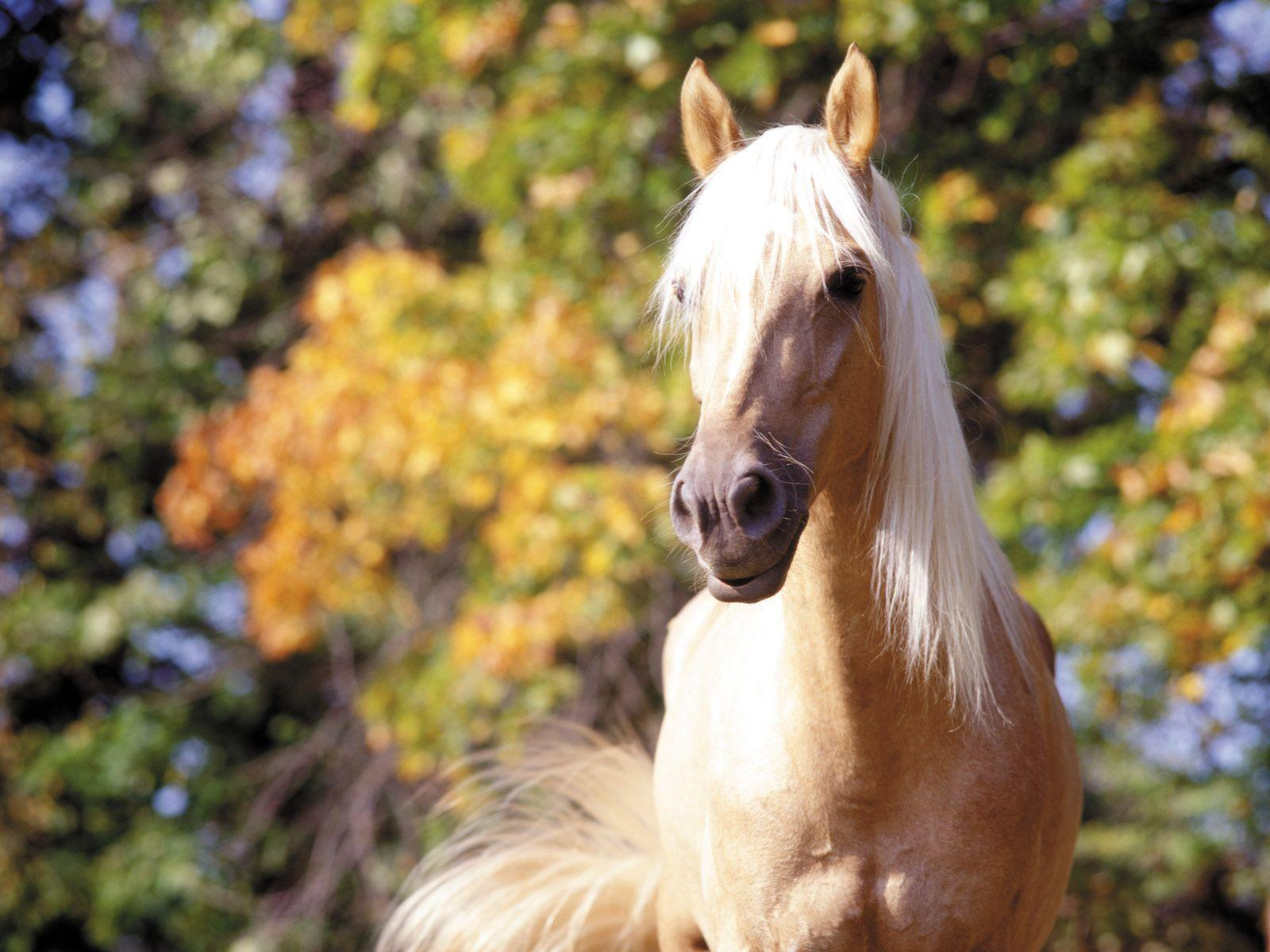 Free horse wallpapers wallpaper cave - Free horse backgrounds ...