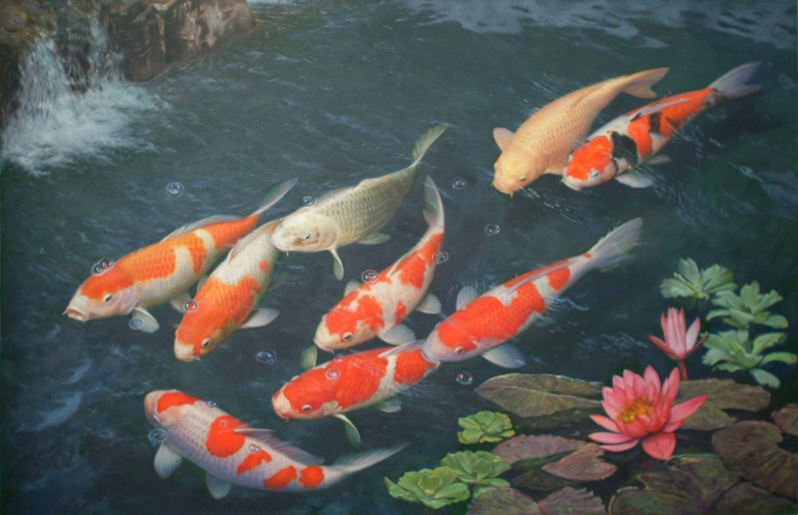 Koi fish wallpapers wallpaper cave for Fish pond images
