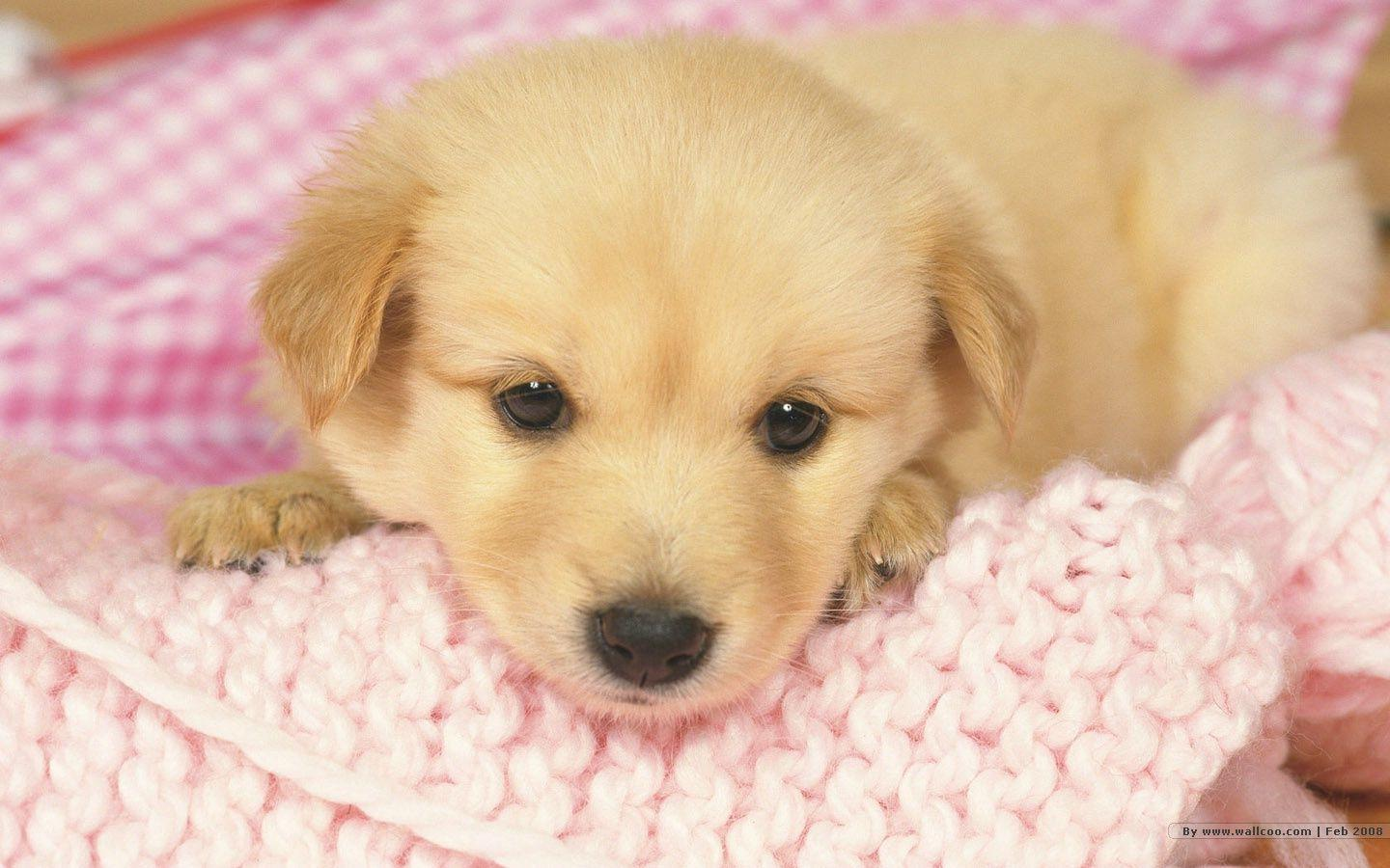Dogs And Puppies Wallpaper Puppy Wallpaper...